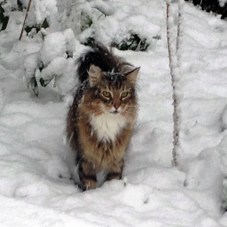 Sommerhitze & Katzen