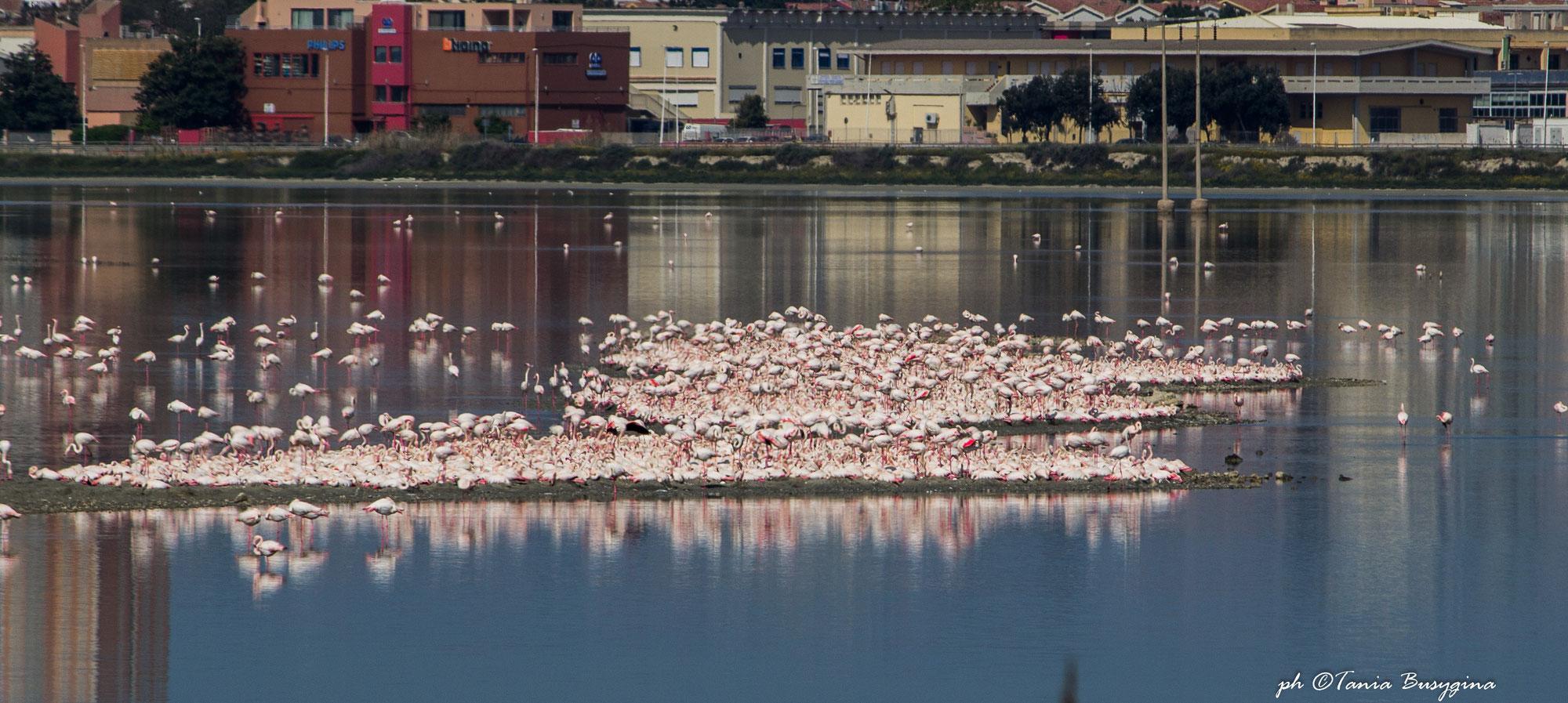 В поисках розовых фламинго на Сардинии. Прогулка по парку-заповеднику Молентарджус в Кальяри.