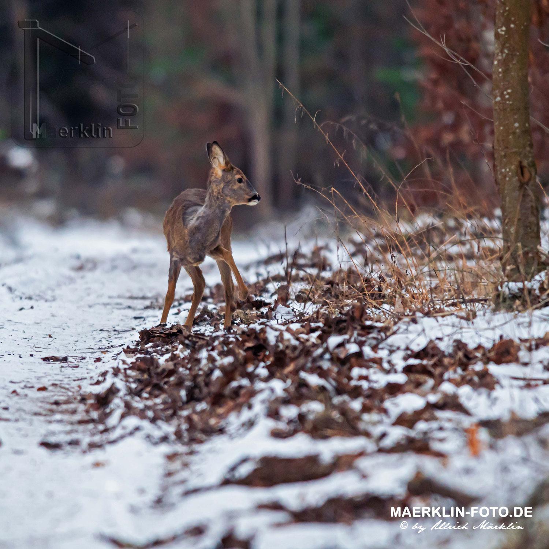 Winterliche Fotopirsch