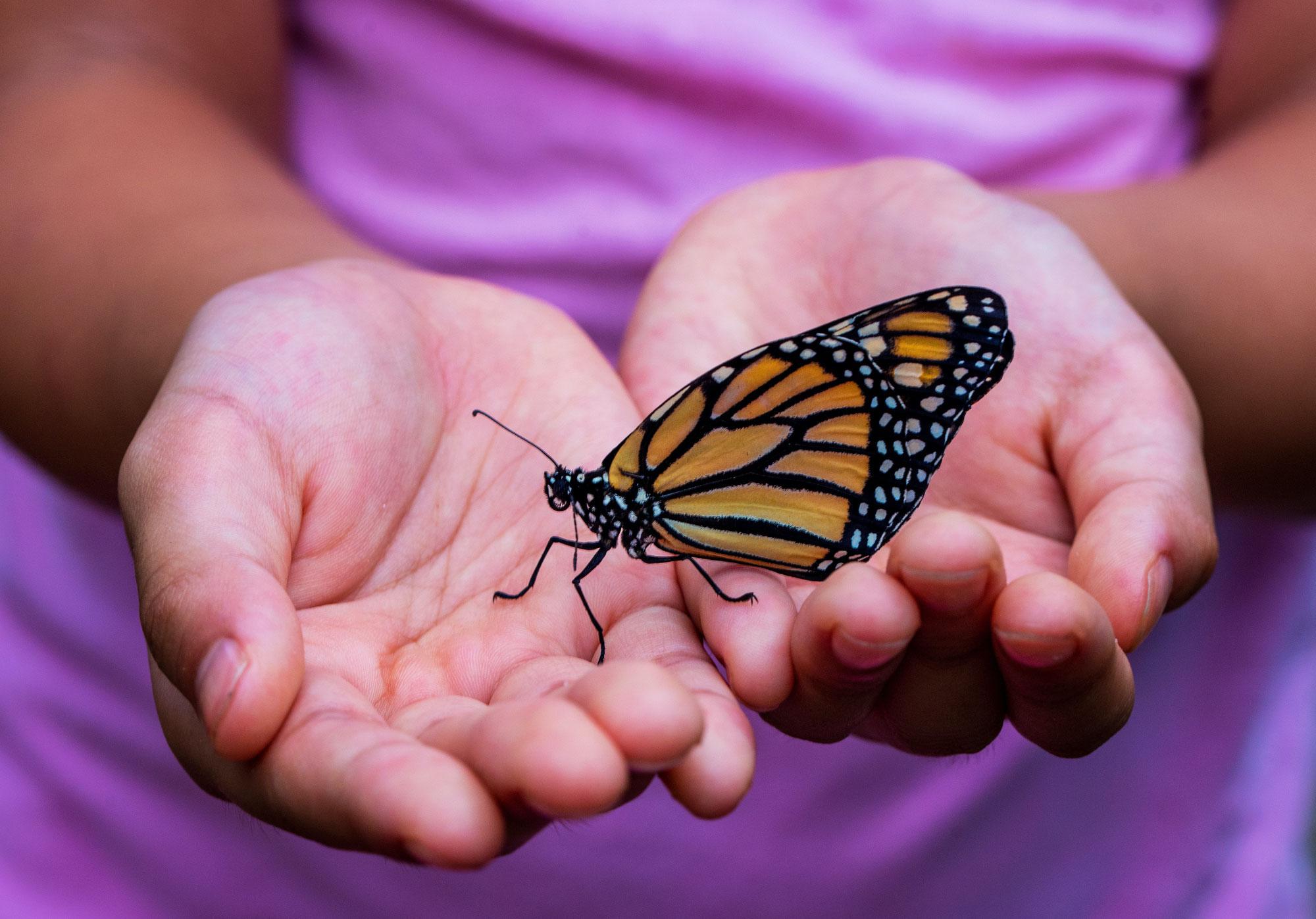 De vlinder ontpopt zich ♥ Martha Krul ♥ Lichtwerkers Nederland