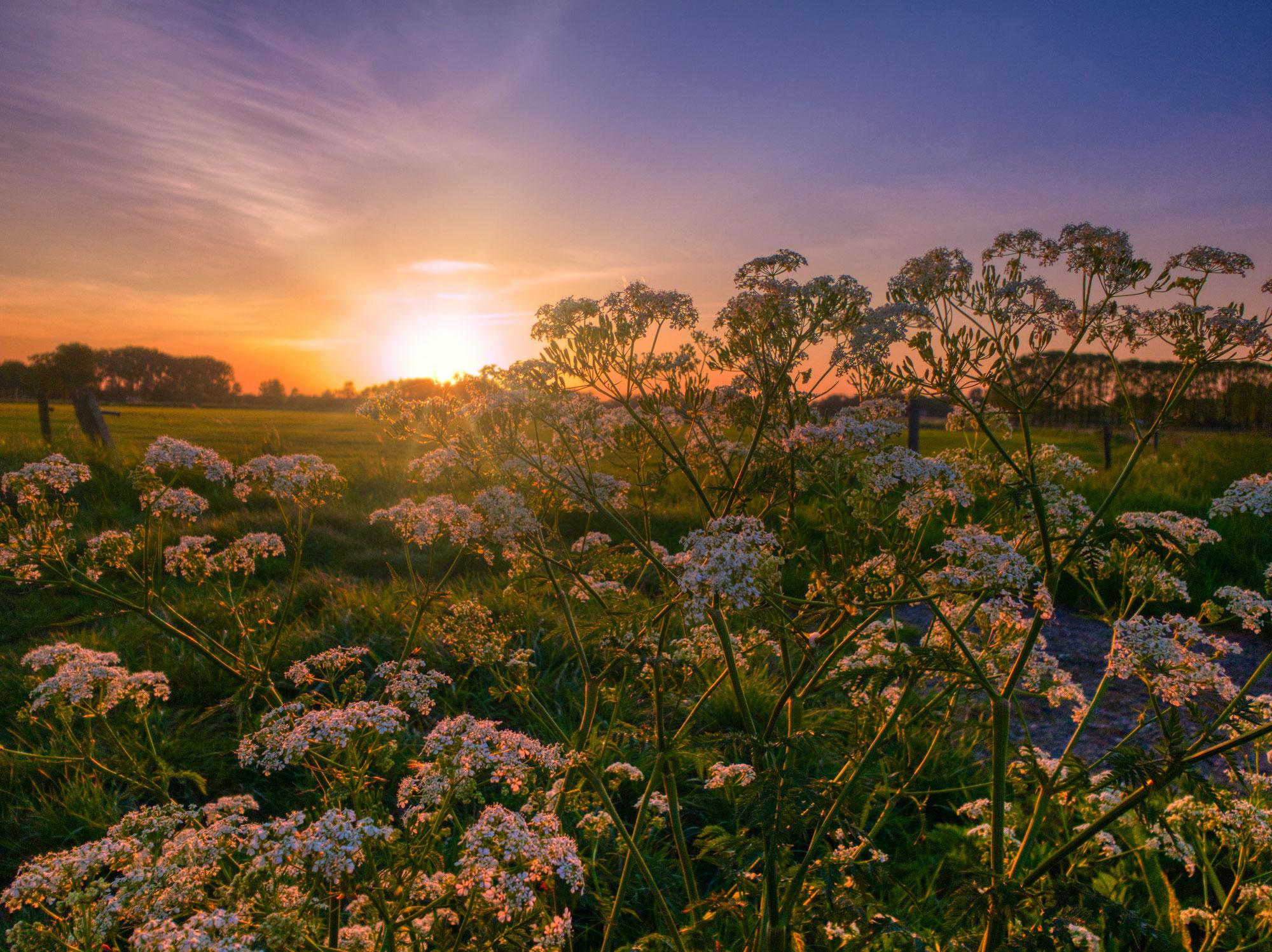 Steeds dieper open gaan voor de Goddelijke Aanwezigheid in jou, op Aarde ♥ Mieke Vulink ♥ Lichtwerkers Nederland