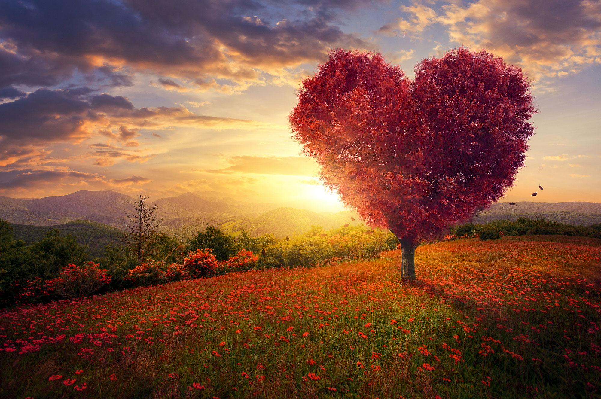 Compassie is een kwaliteit van het hart ♥ Ralph Nelissen ♥ Lichtwerkers Nederland