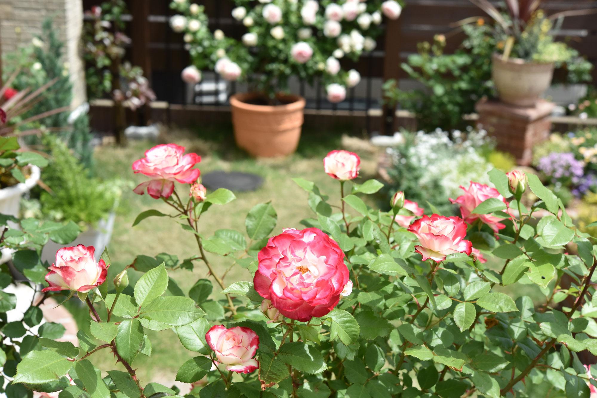きれいな花を咲かせるために重要な冬のお手入れ♡