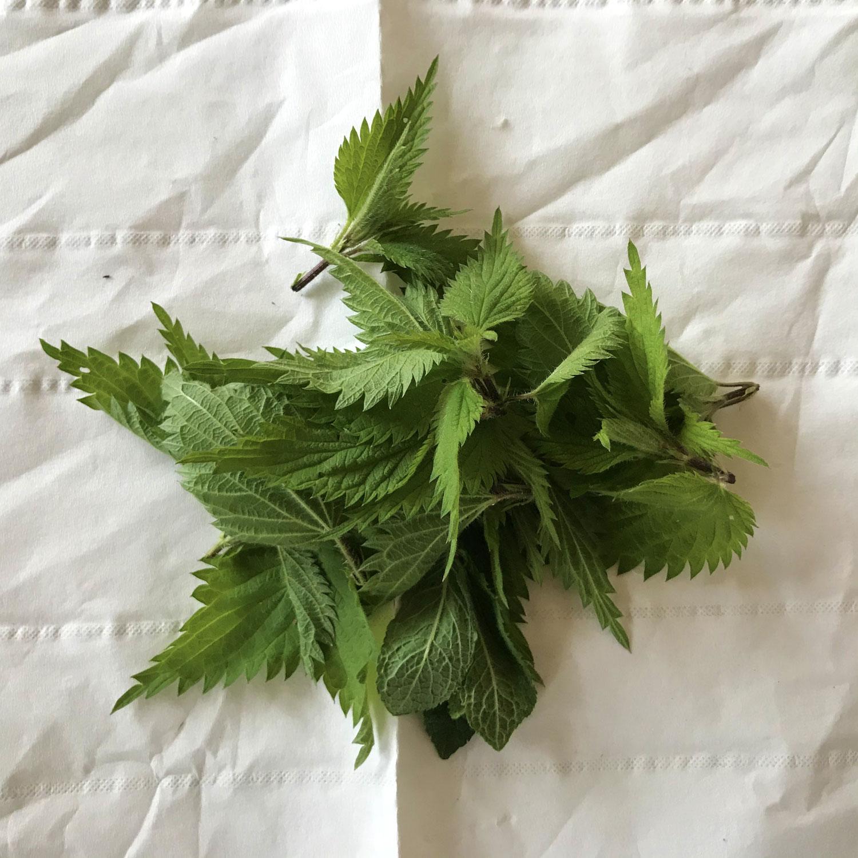 Detox mit Wildpflanzen Power & Reinigungspraktiken