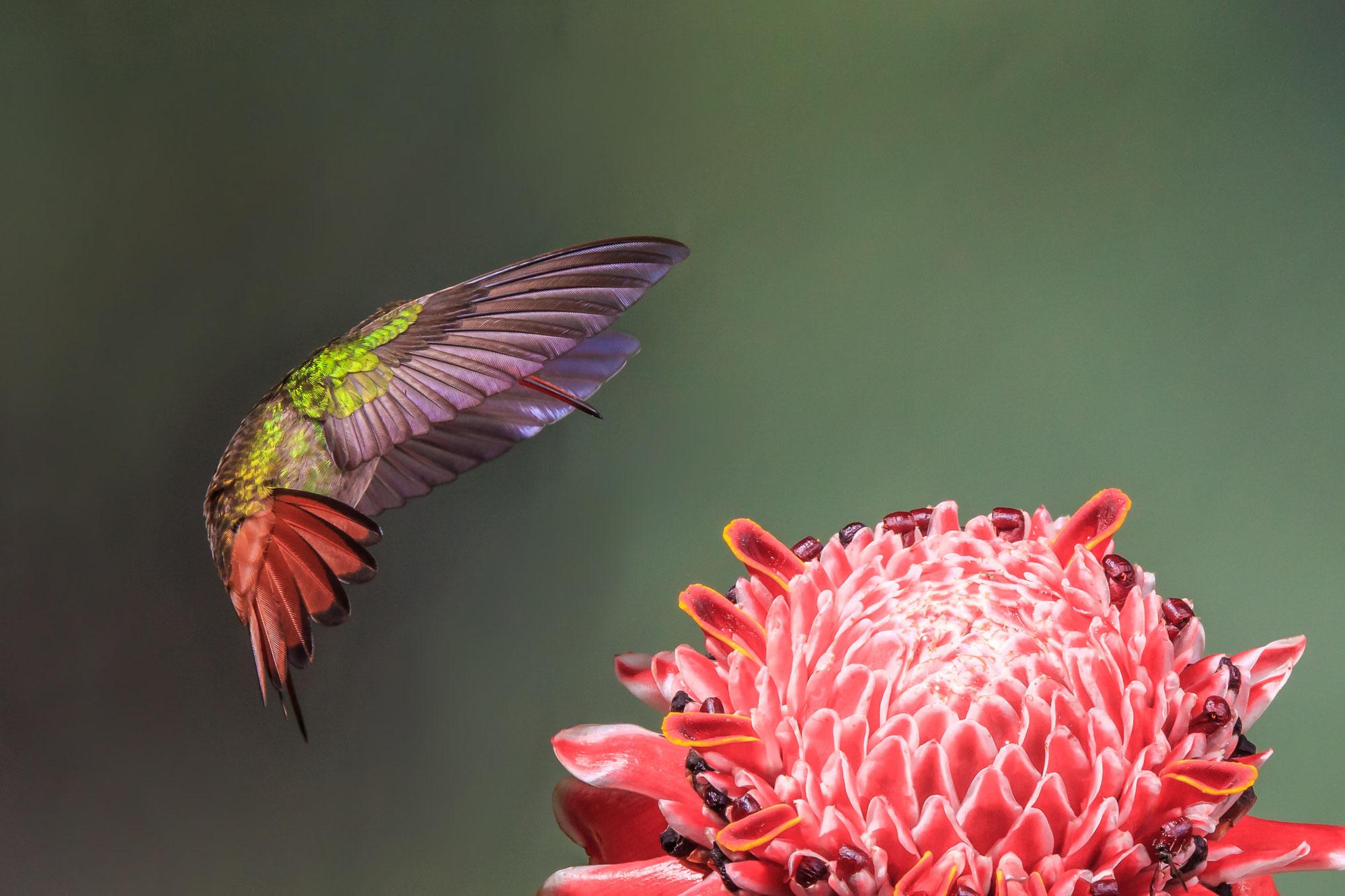 Costa Rica: paraíso de las aves