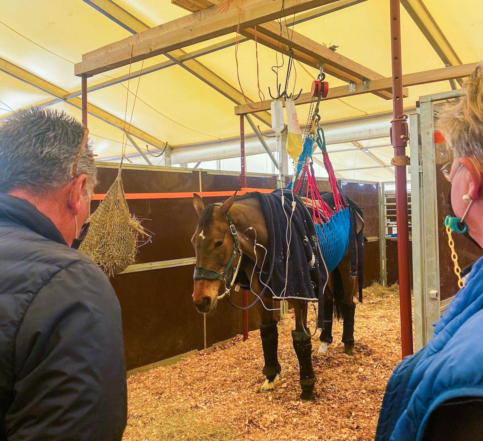 De Watermolen en Horses2Fly sturen medicatie naar Valencia
