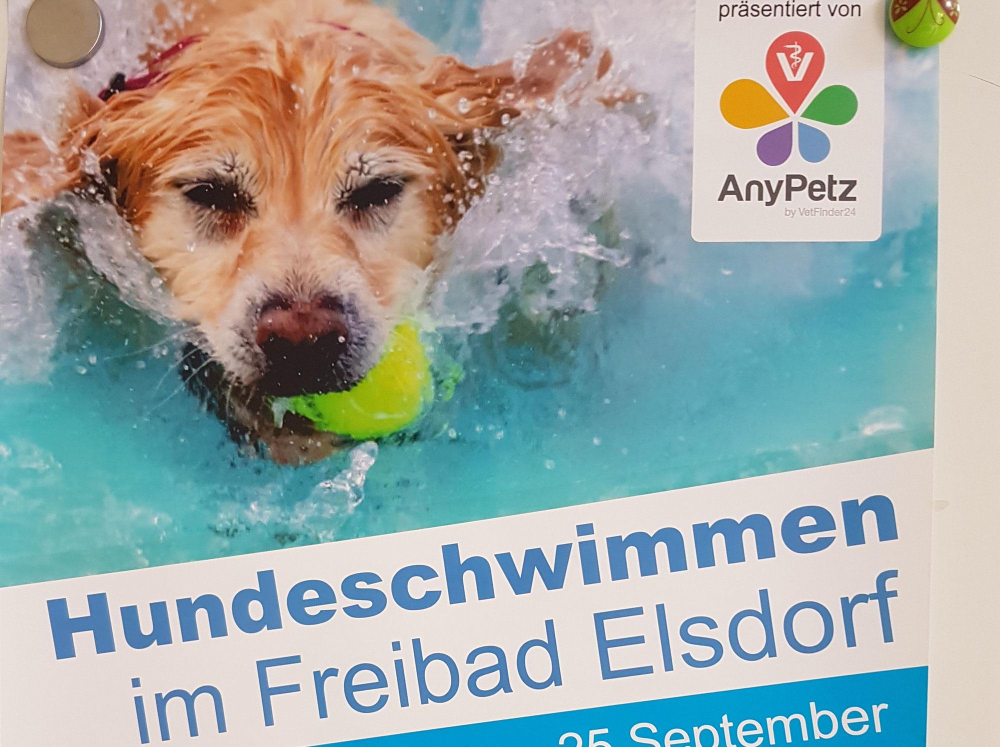 Hundeschwimmen im Freibad Elsdorf