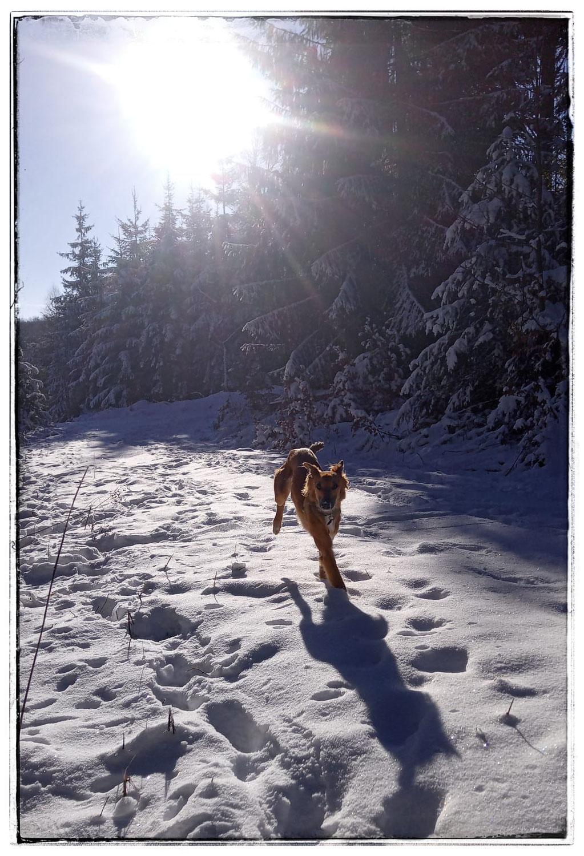 immer noch sooo viel Schnee und sooo schöne Fotos