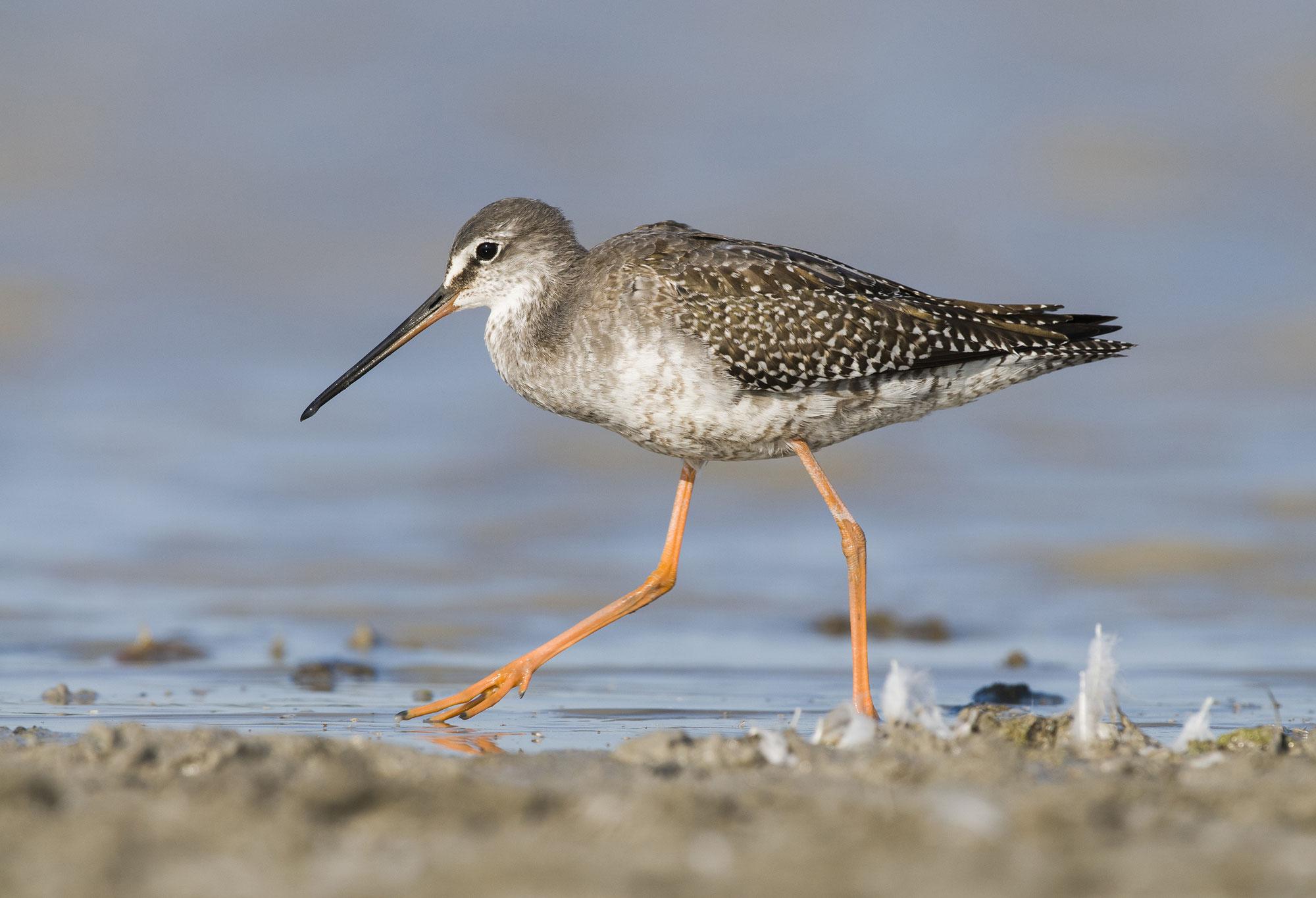 Kosmos Webinare: Vogelbestimmung