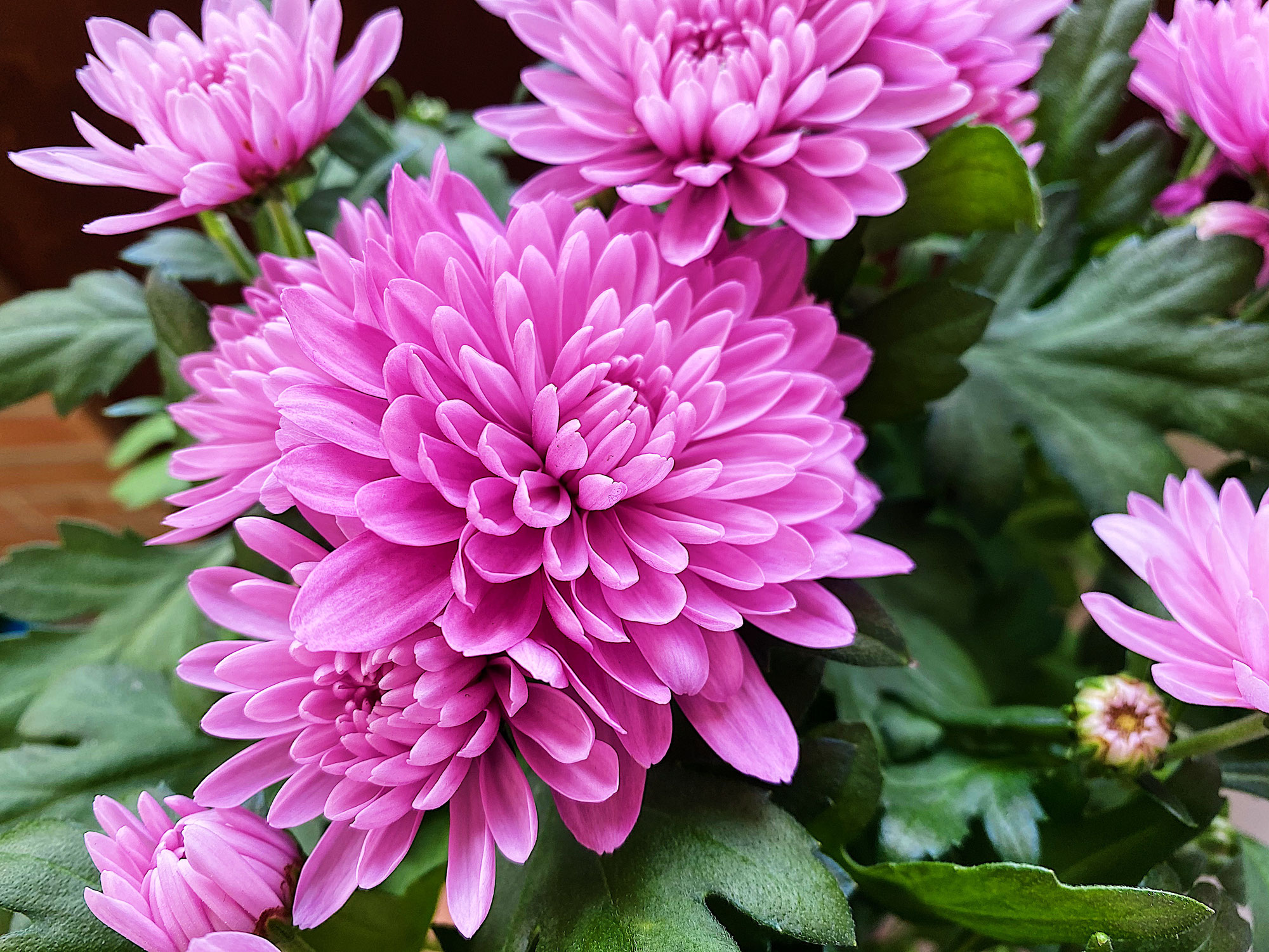 Pop Up: fioriture pirotecniche