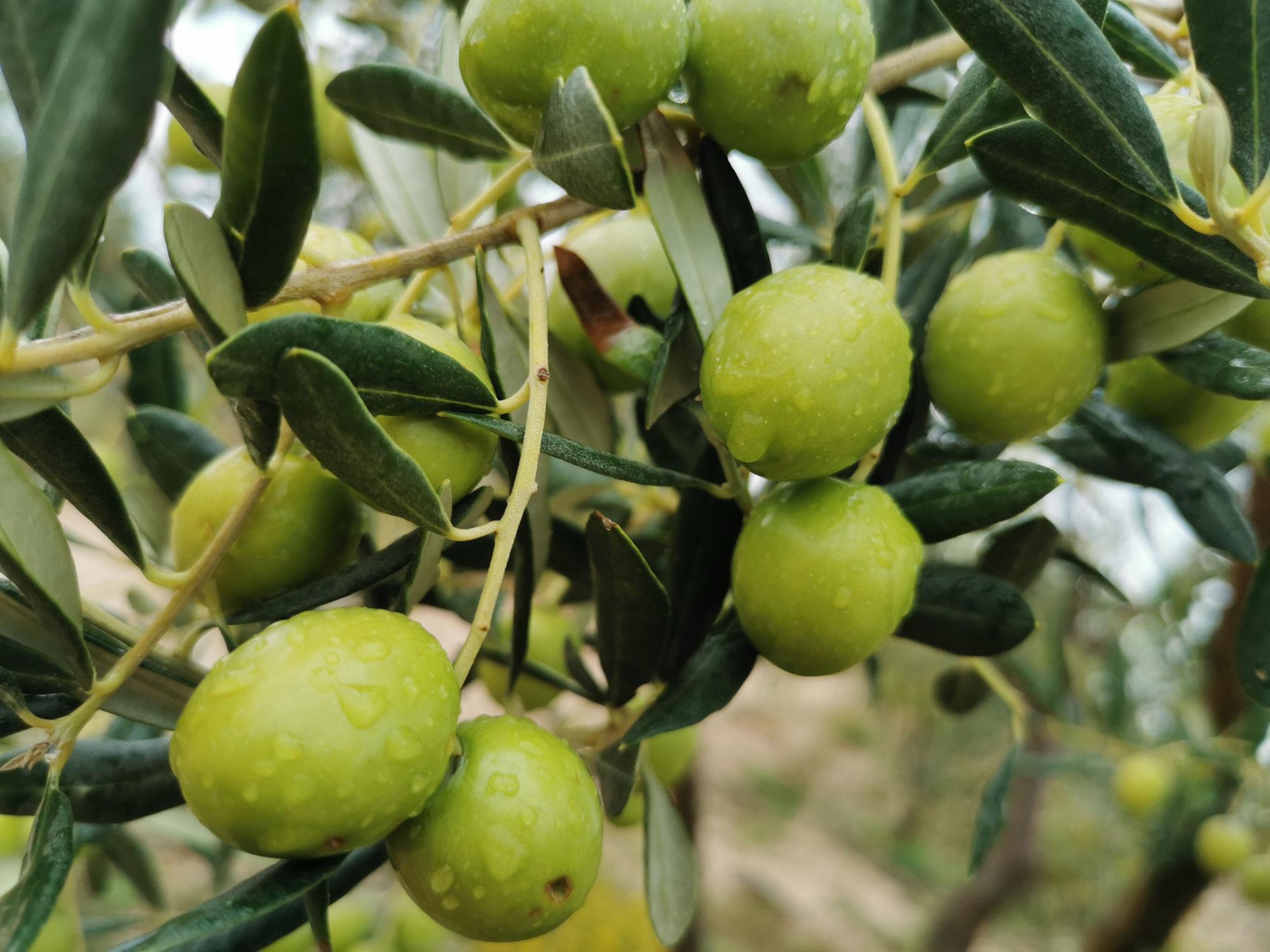 Olivenholz im Kreativhaus erhältlich!