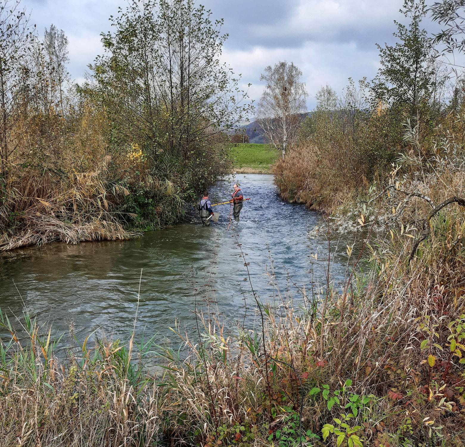 Kontrollabfischen Umgehungsgewässer Leibstadt vom 5. November 2020