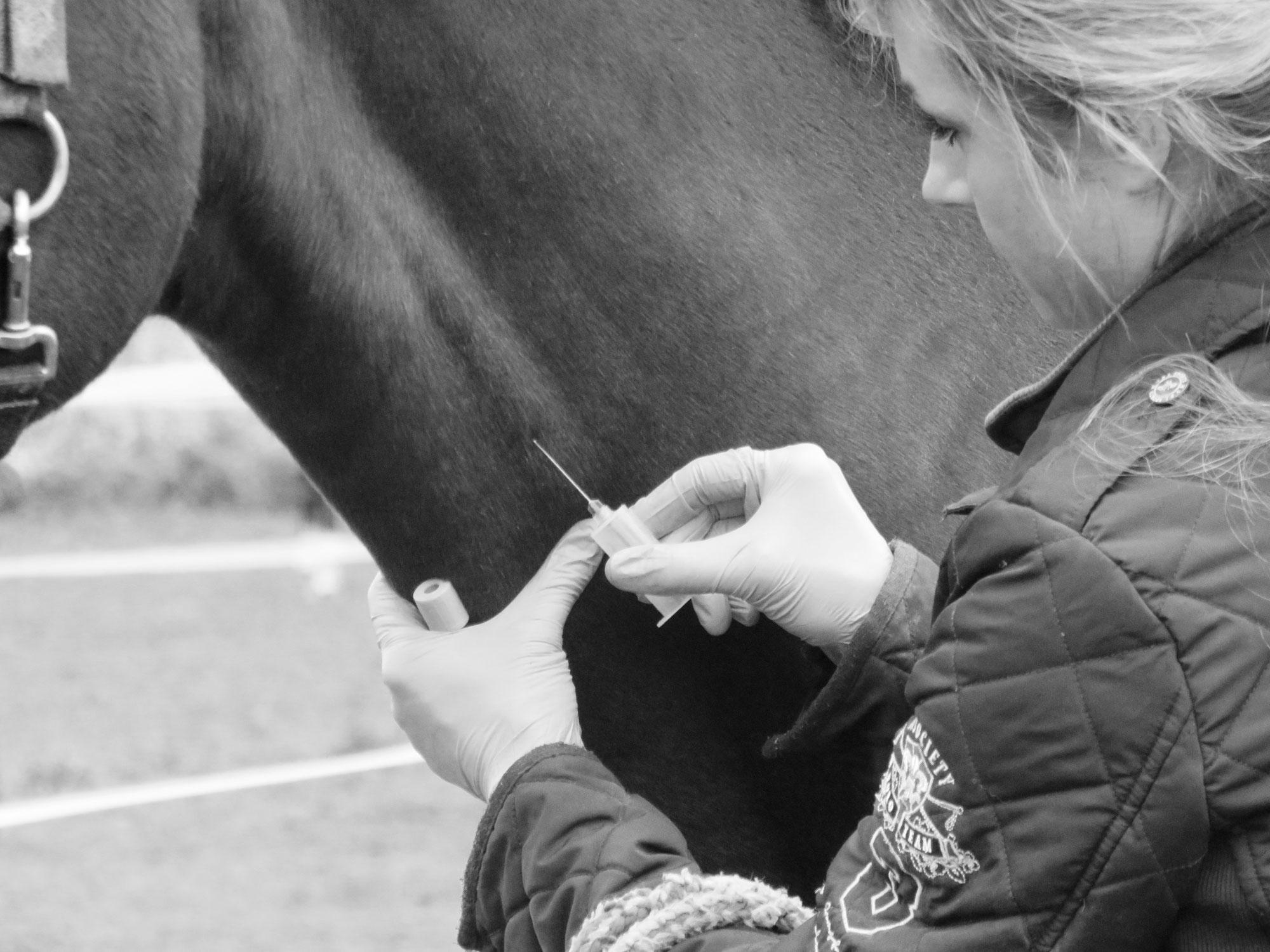 #14 - Wissenswertes über Pferdeblut