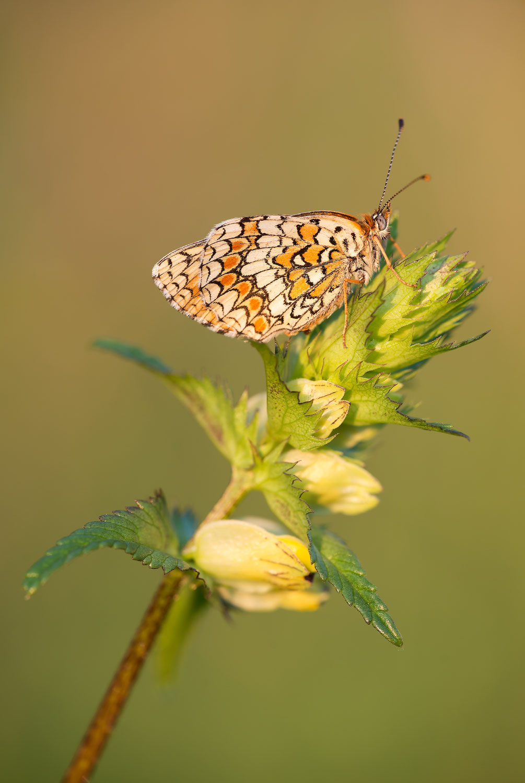Butterfly-Effect!