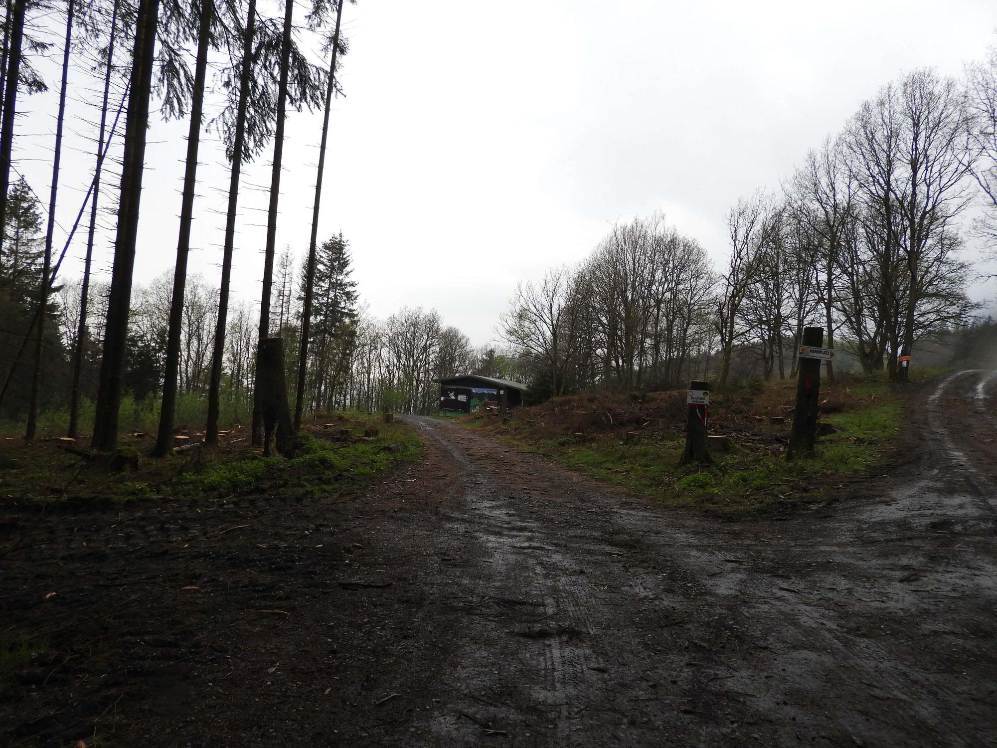 Waldarbeiten am Eichholzkopf