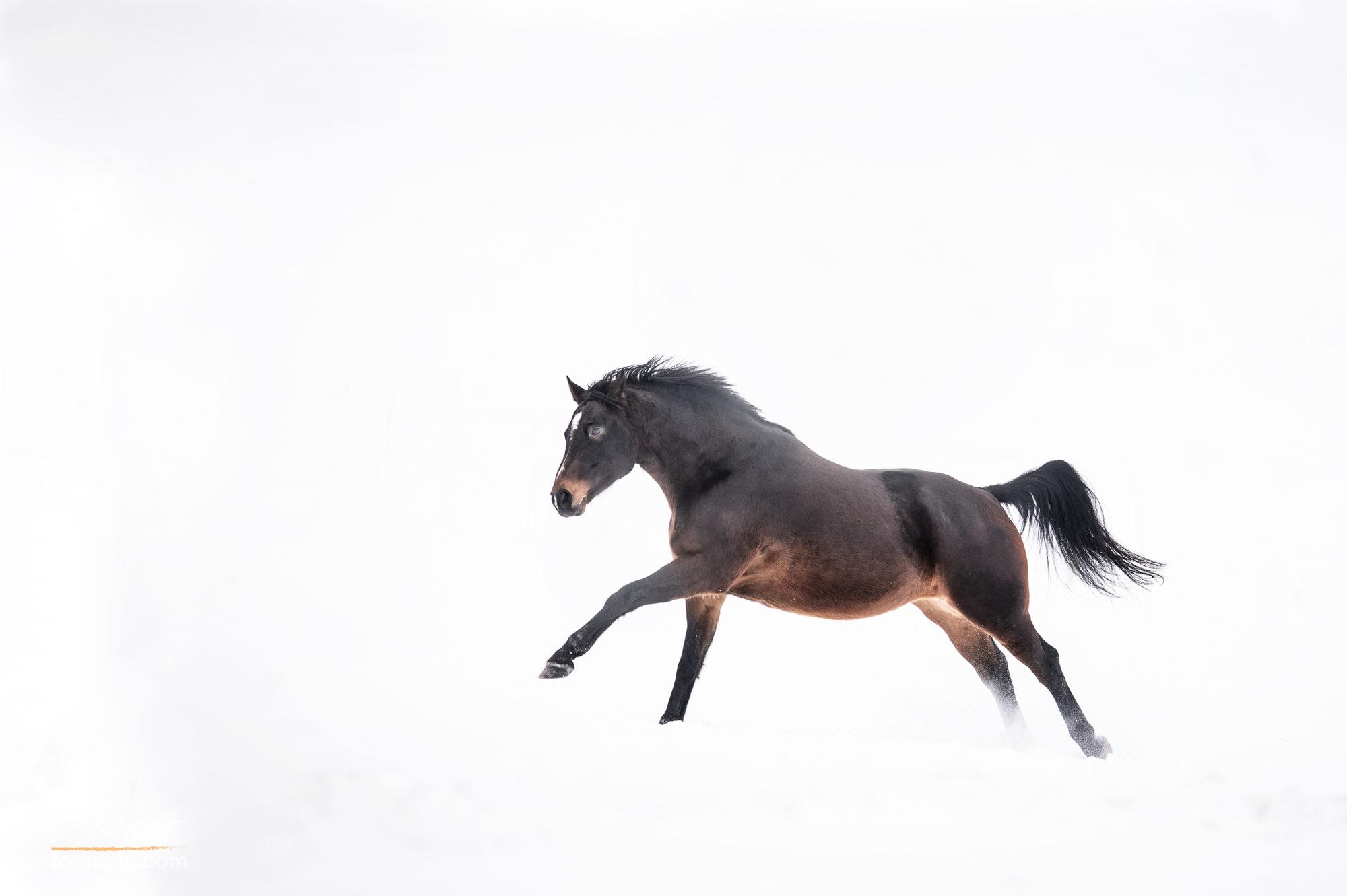 Michi und seine Mädels | Pferdefotografie Münsingen
