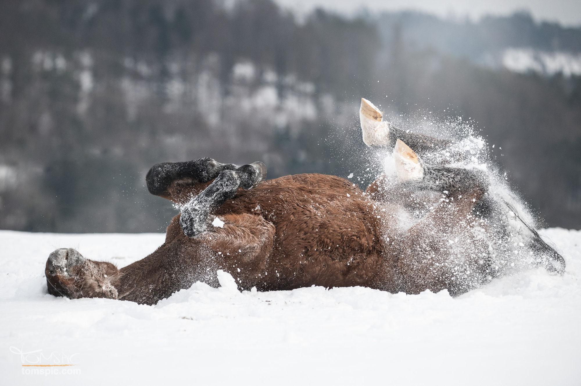 Wintershooting mit Conny | Pferdefotografie Murrhardt