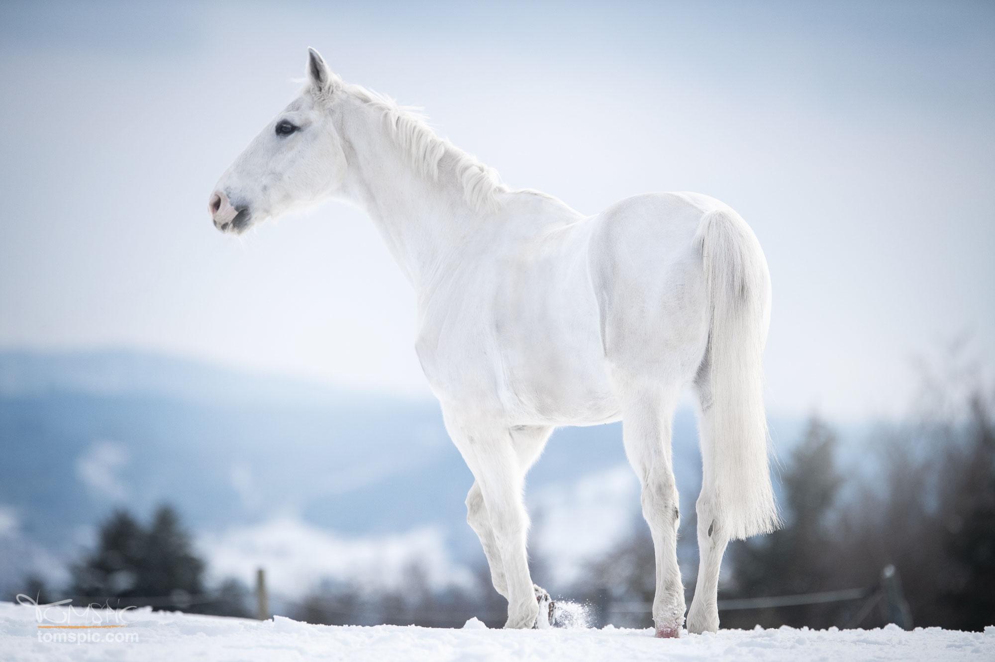 Wintershooting mit Eva | Pferdefotografie Murrhardt