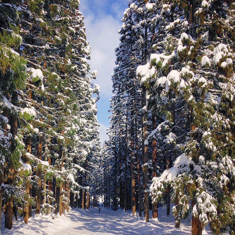 Snow Resort