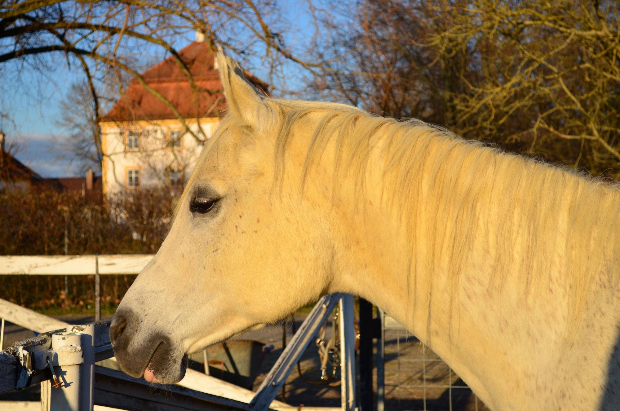 Das ältere Pferd - Probleme beim Fellwechsel?!