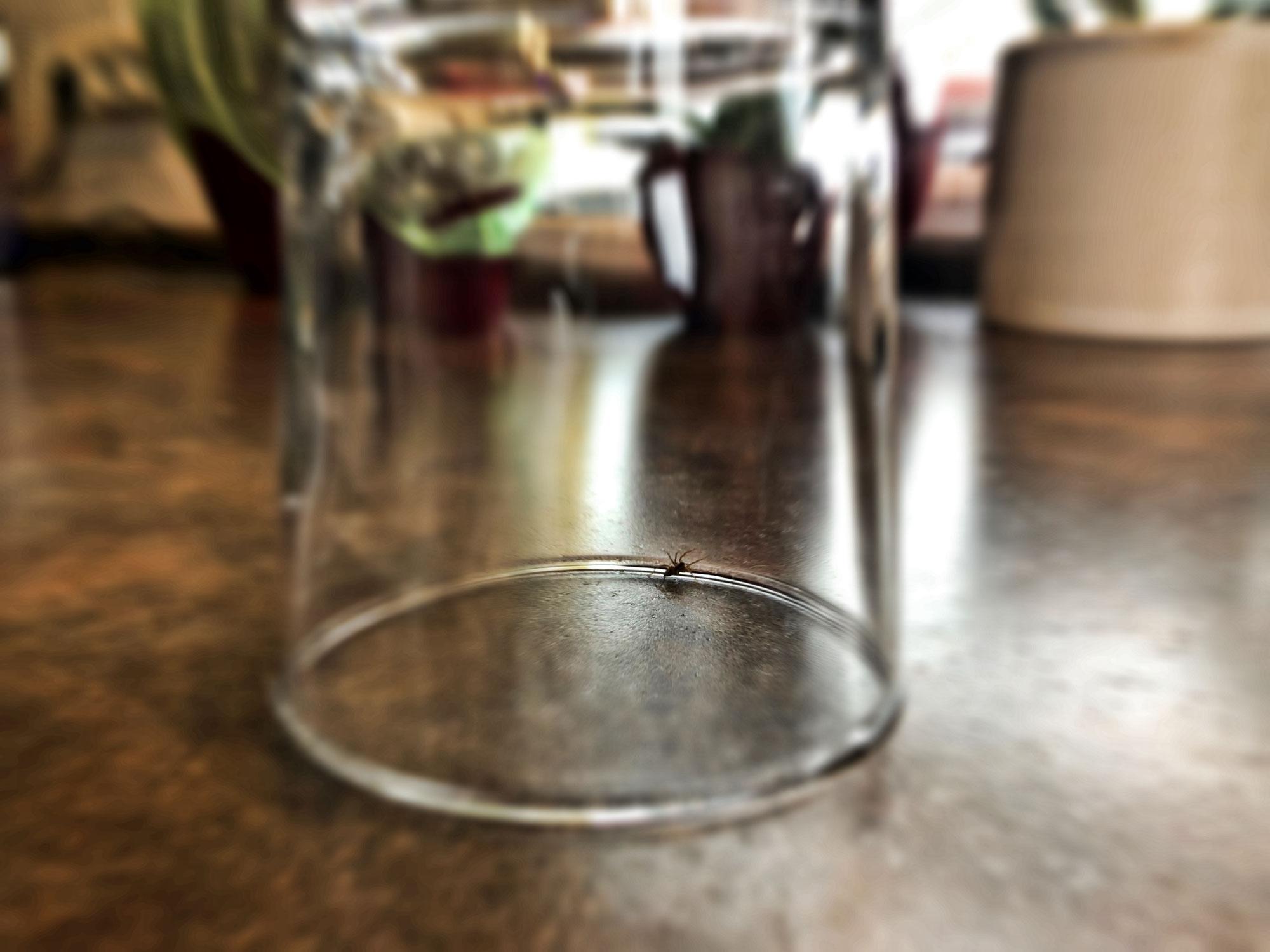 Die Spinne unterm Wasserglas