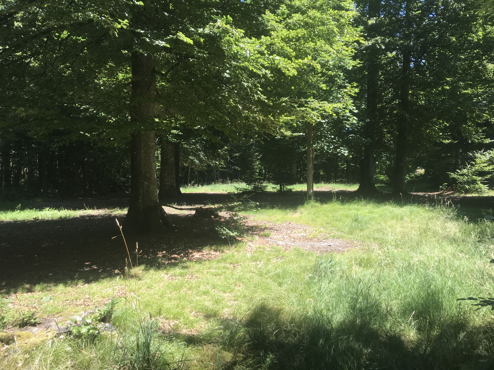 Waldfest 2021 abgesagt