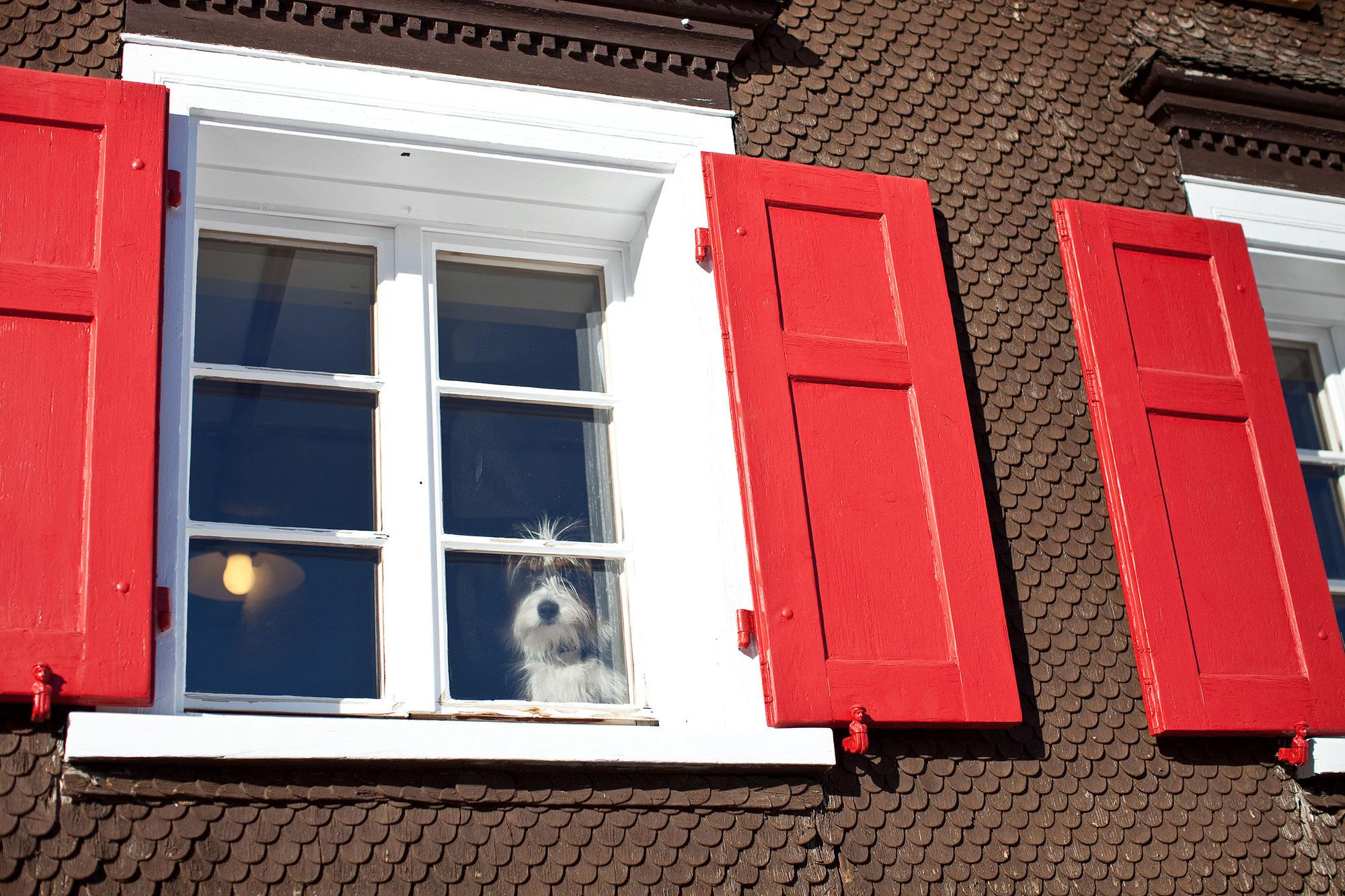 Terrassen open voor daggasten!
