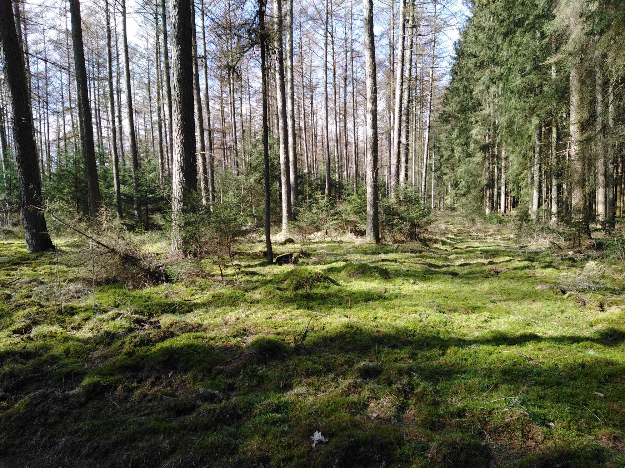 Traumreise - oder Lüneburger Heide real