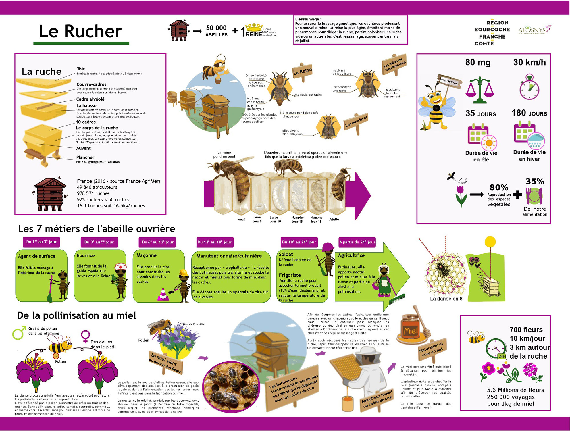Panneaux pédagogiques pour comprendre les abeilles et le rucher