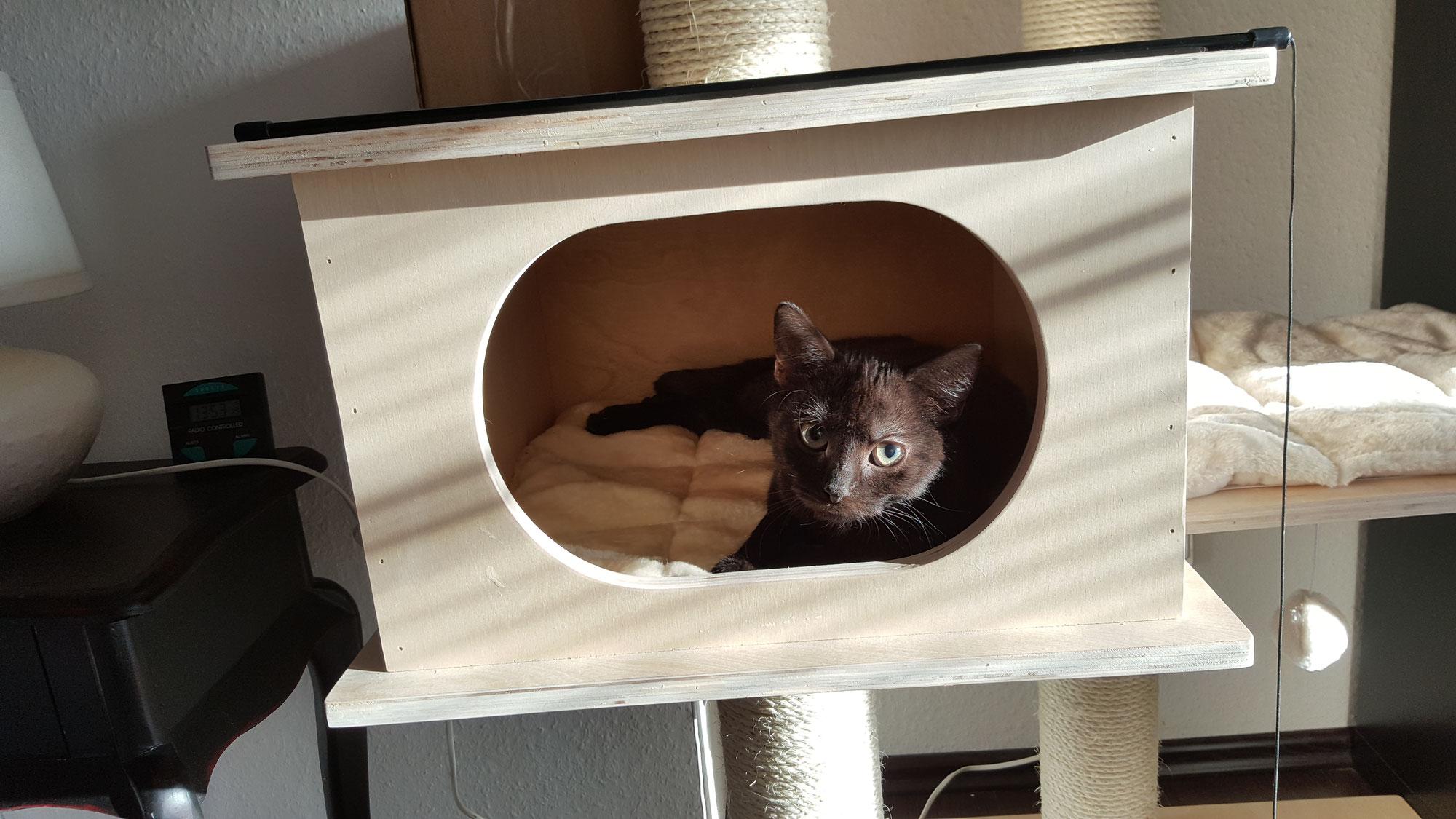 Wie richte ich meine Wohnung katzengerecht ein?