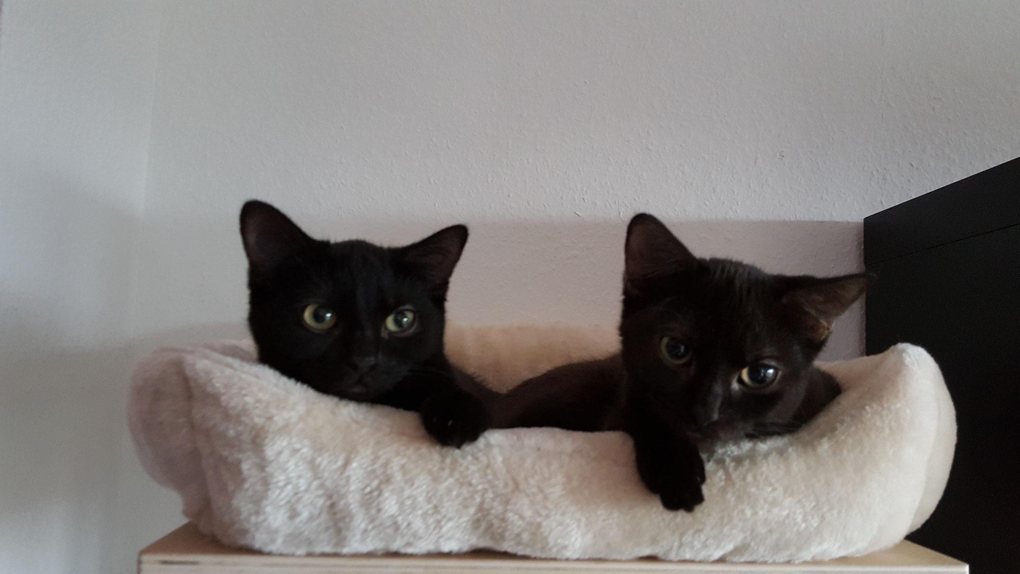 Zwei Katzen - doppeltes Glück?