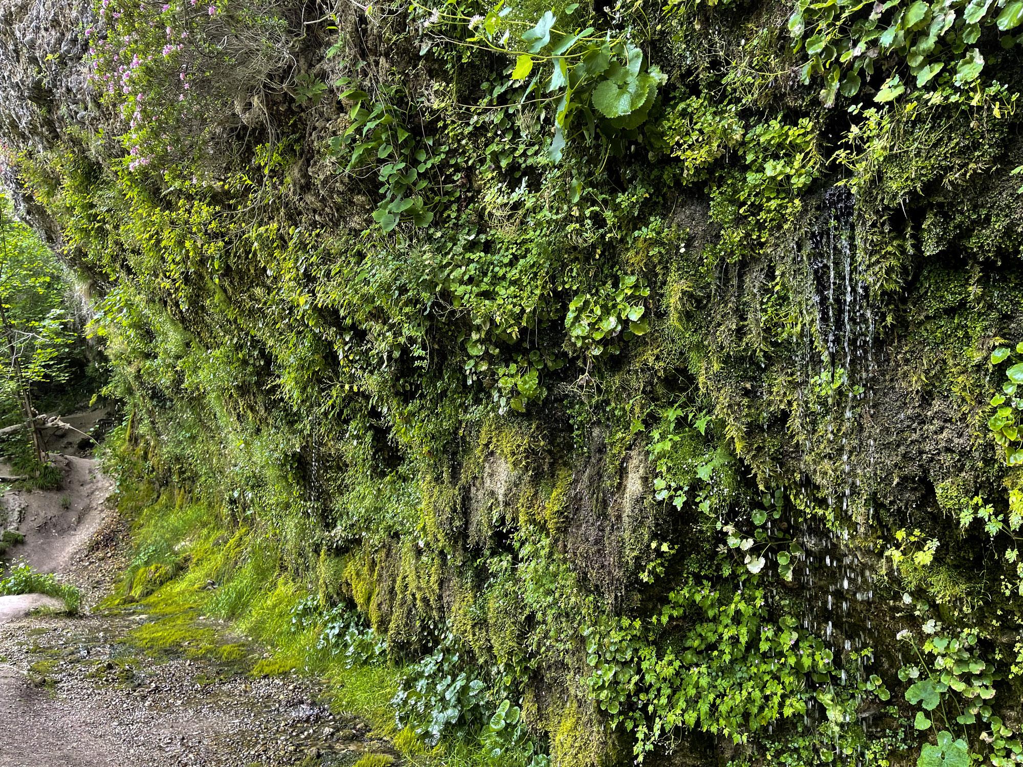 Die rinnende Mauer