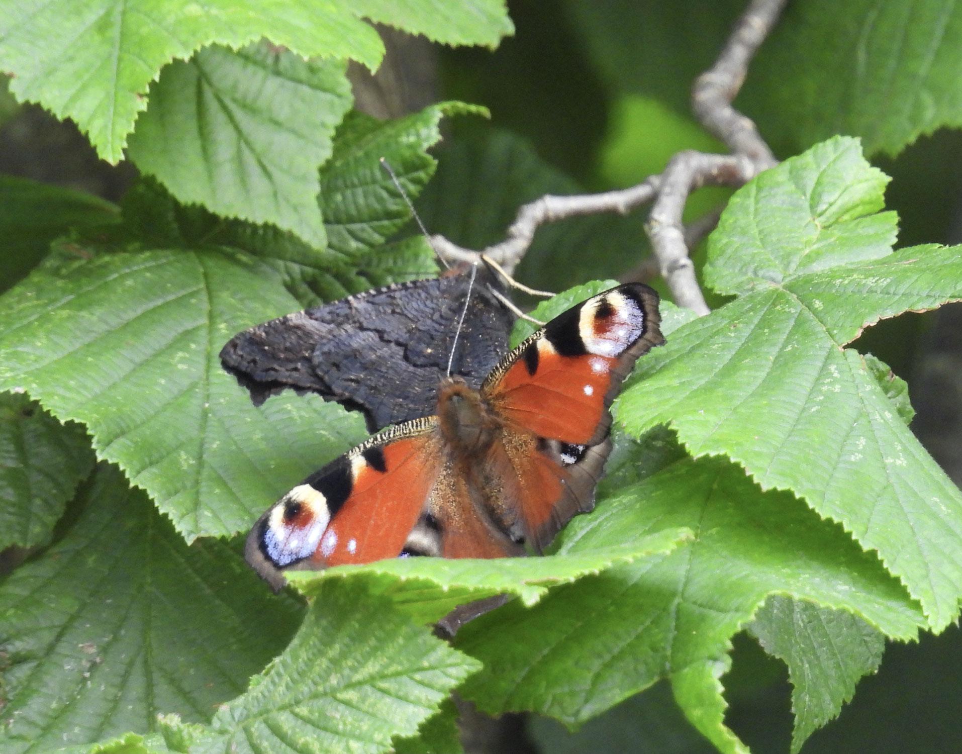 Insekten - Beobachtungen beim Insektensommer im August