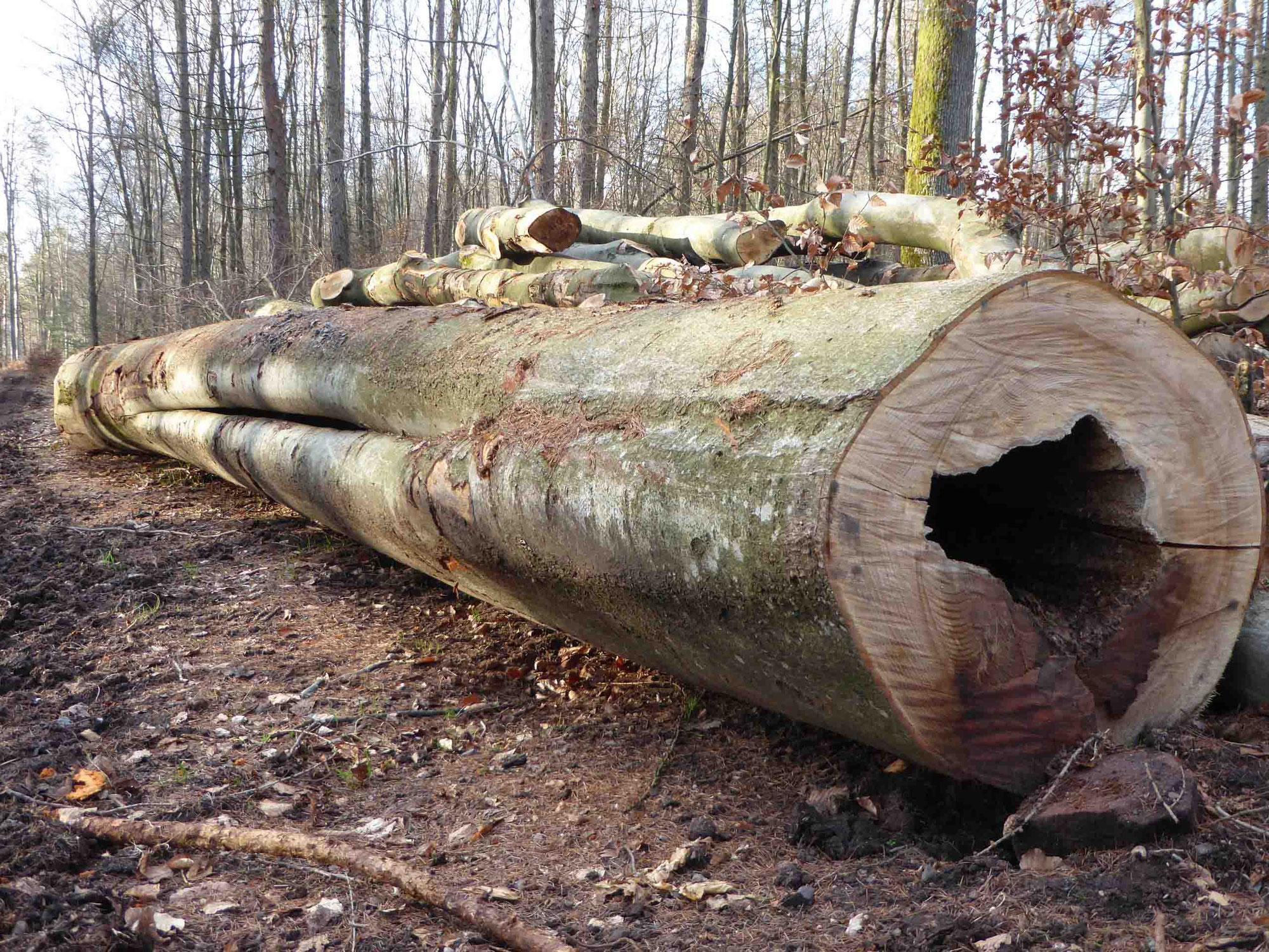 Wird Forstwirtschaft in Deutschland illegal betrieben?