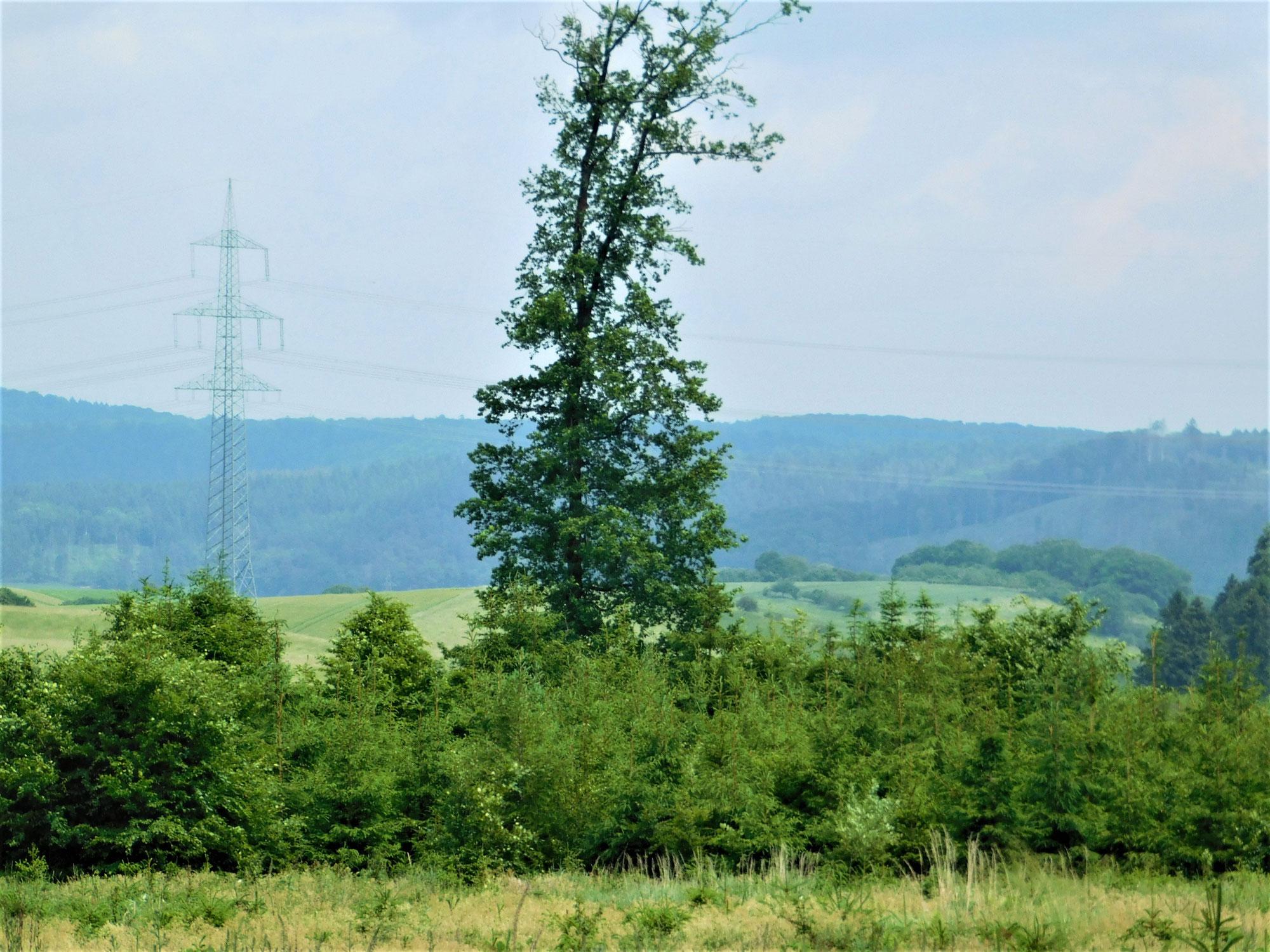 """NRW: Zerstörung von Altbuchenwäldern im Waldgebiet """"Bohles Kump"""" zwischen Marsberg und Canstein"""