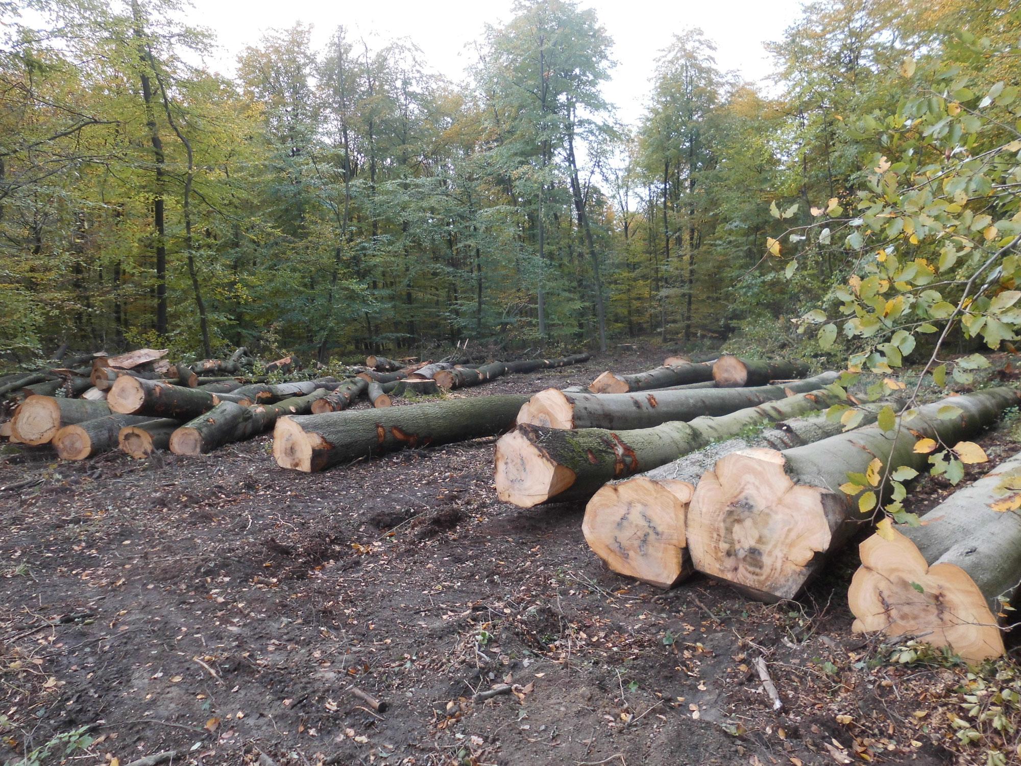 NRW-Münsterland: Die berechtigten Sorgen der Bürger um ihre Wälder