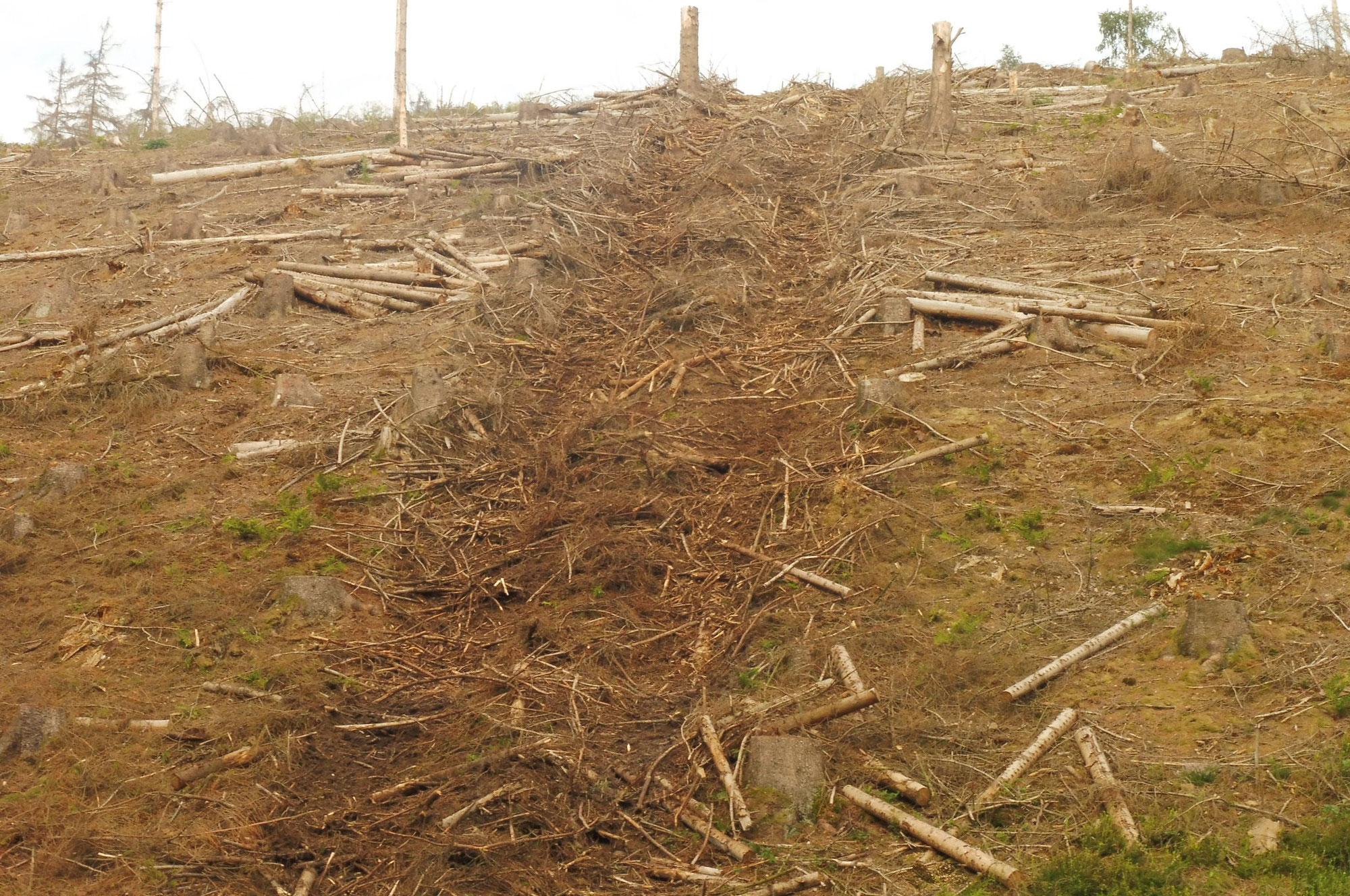 Der Deutsche Holzwirtschaftsrat (DHWR) sorgt sich um verwildernde Wälder