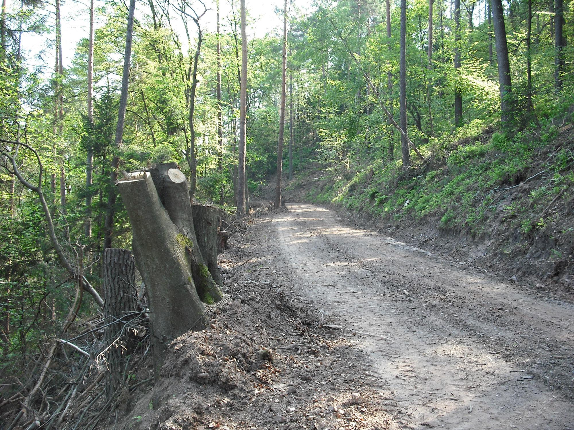 Hessen: Warum auch die Politik endlich Wald lernen muss!