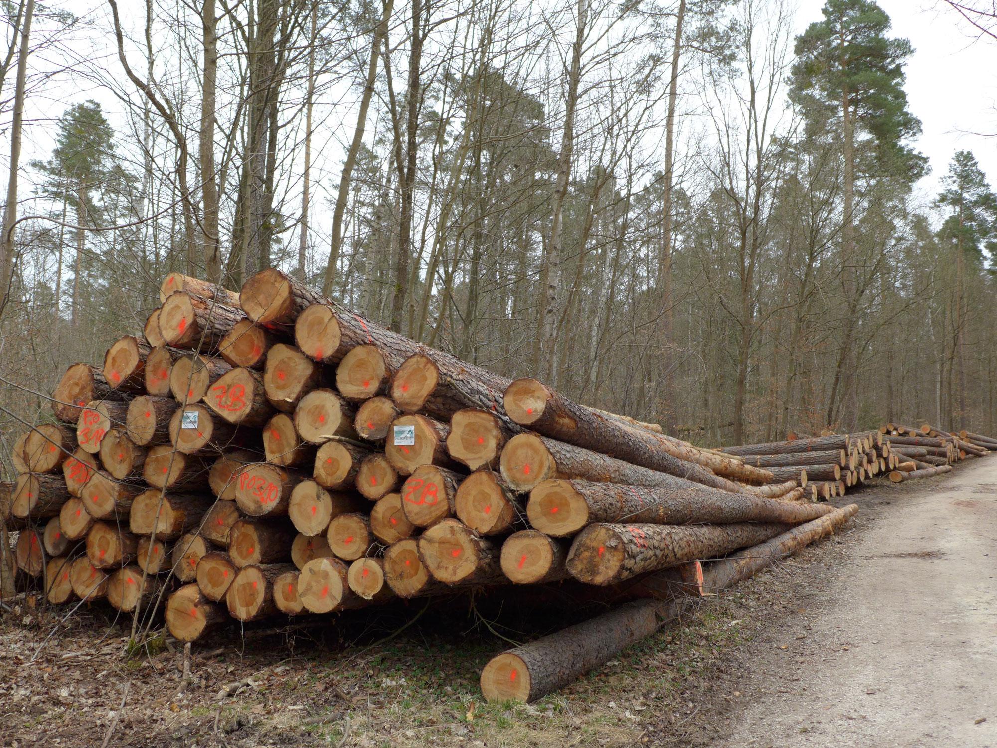 Aktuelles Bayern:  Raubbau oder Waldumbau?