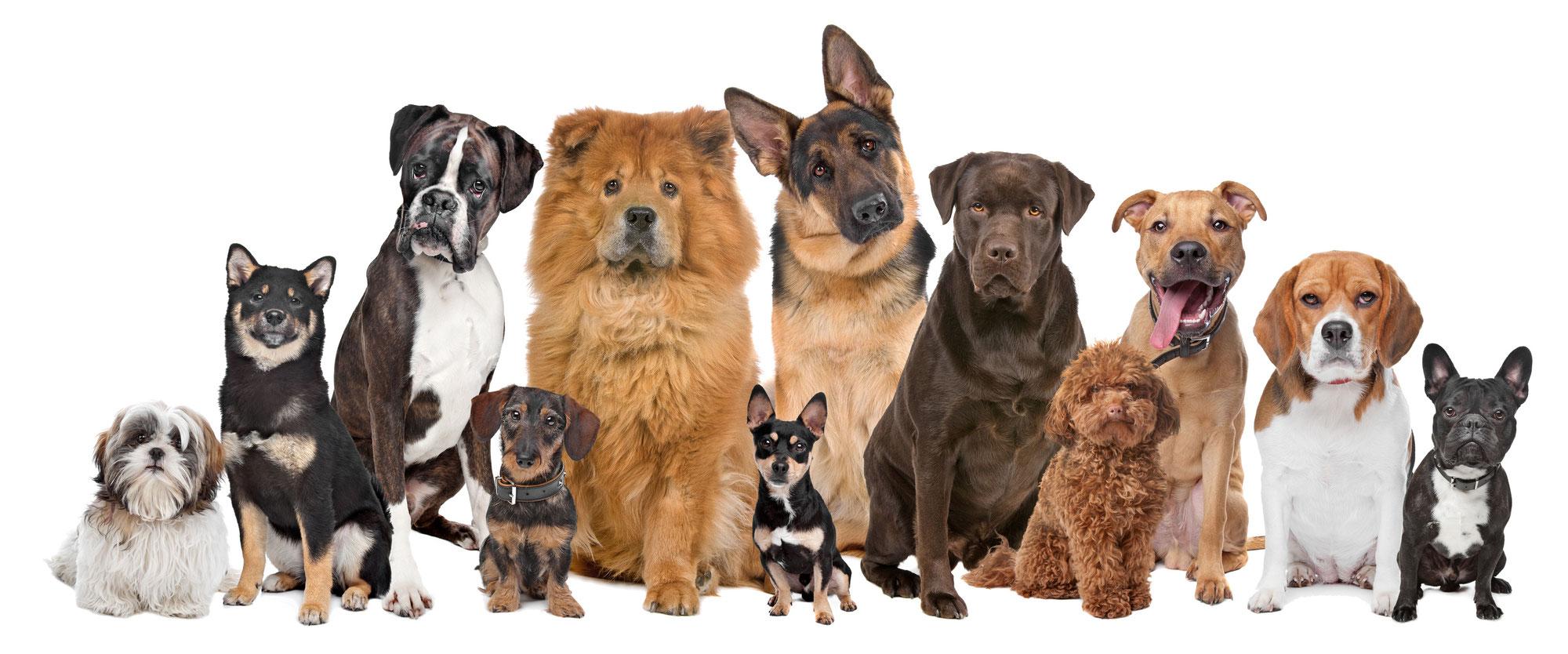 "Aktionstag ""Kollege Hund"""