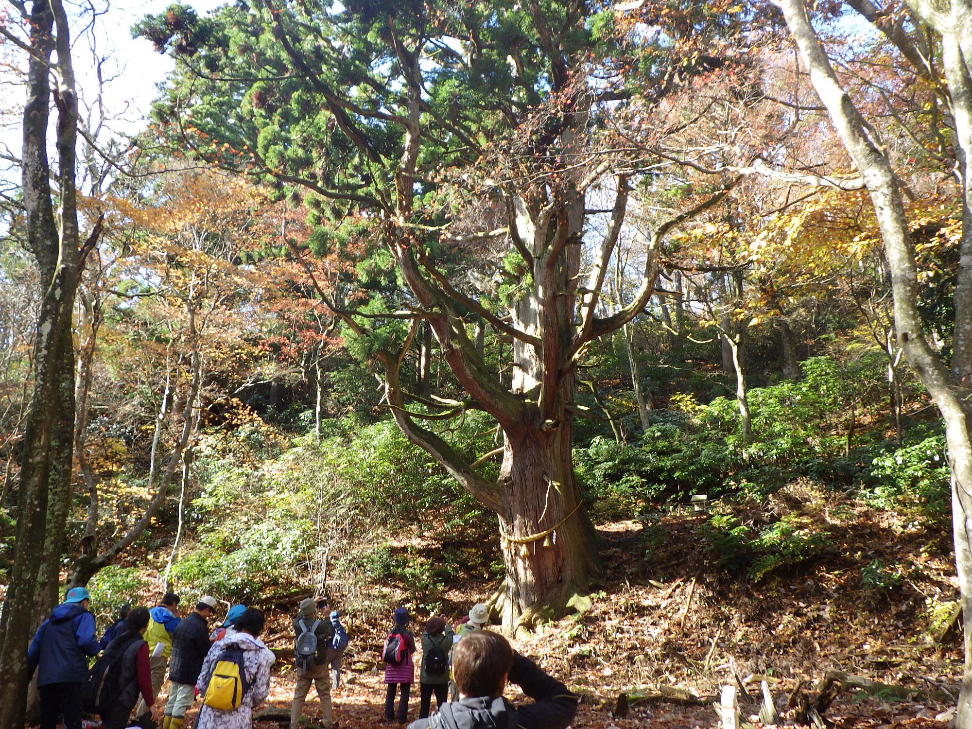 樹齢1000年逆杉と史跡をたずねるトレッキング