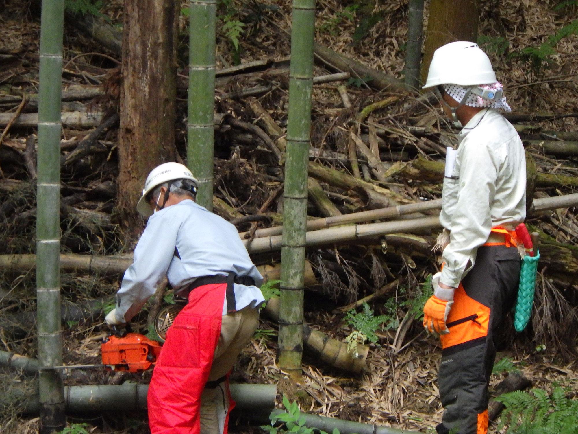 チェーンソーと人海戦術による竹の伐採体験