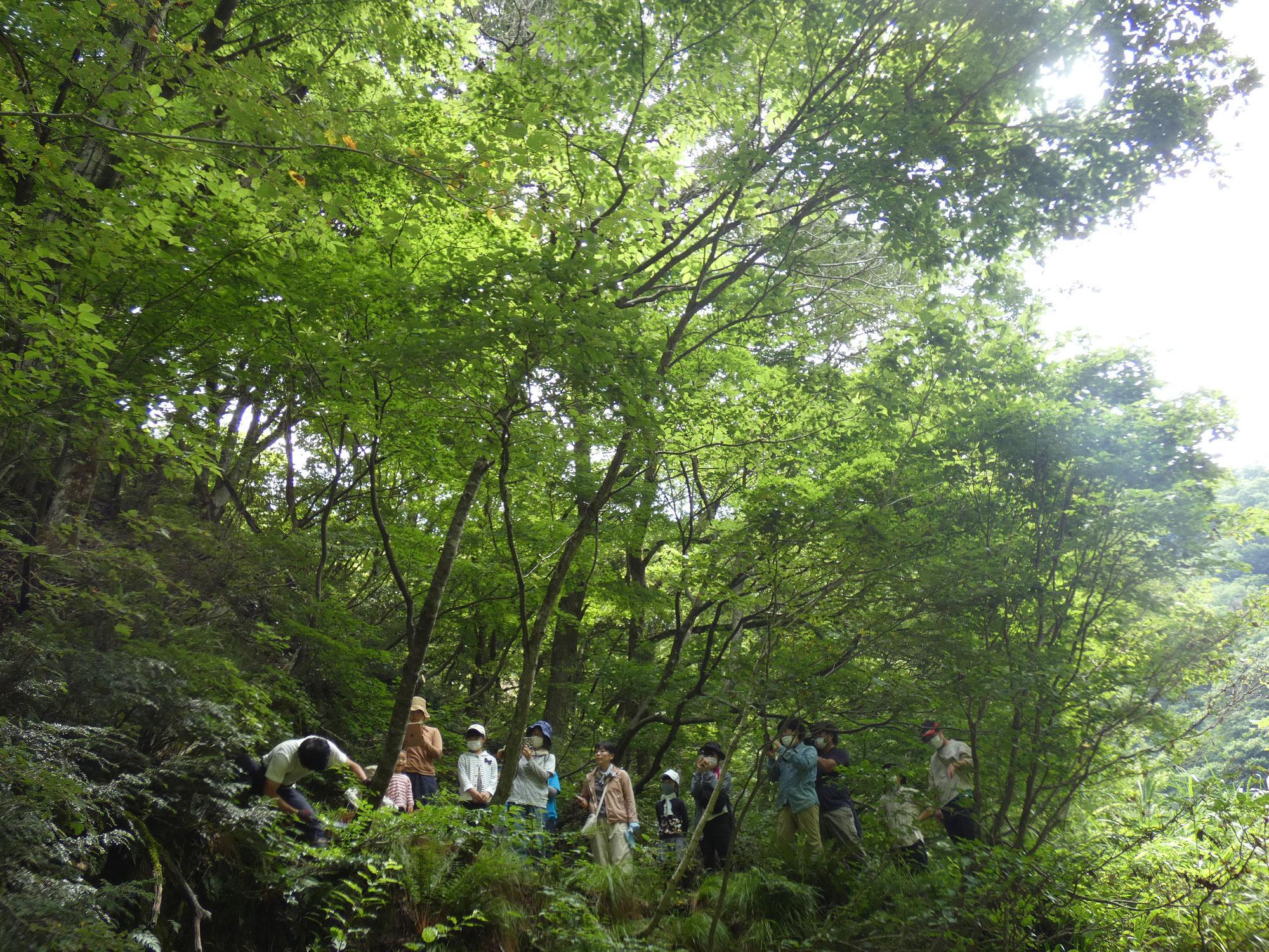 週末森びと養成講座グリーンウッドワーク編初めてのグリーンウッドワーク森に入って木を伐り、お箸づくり