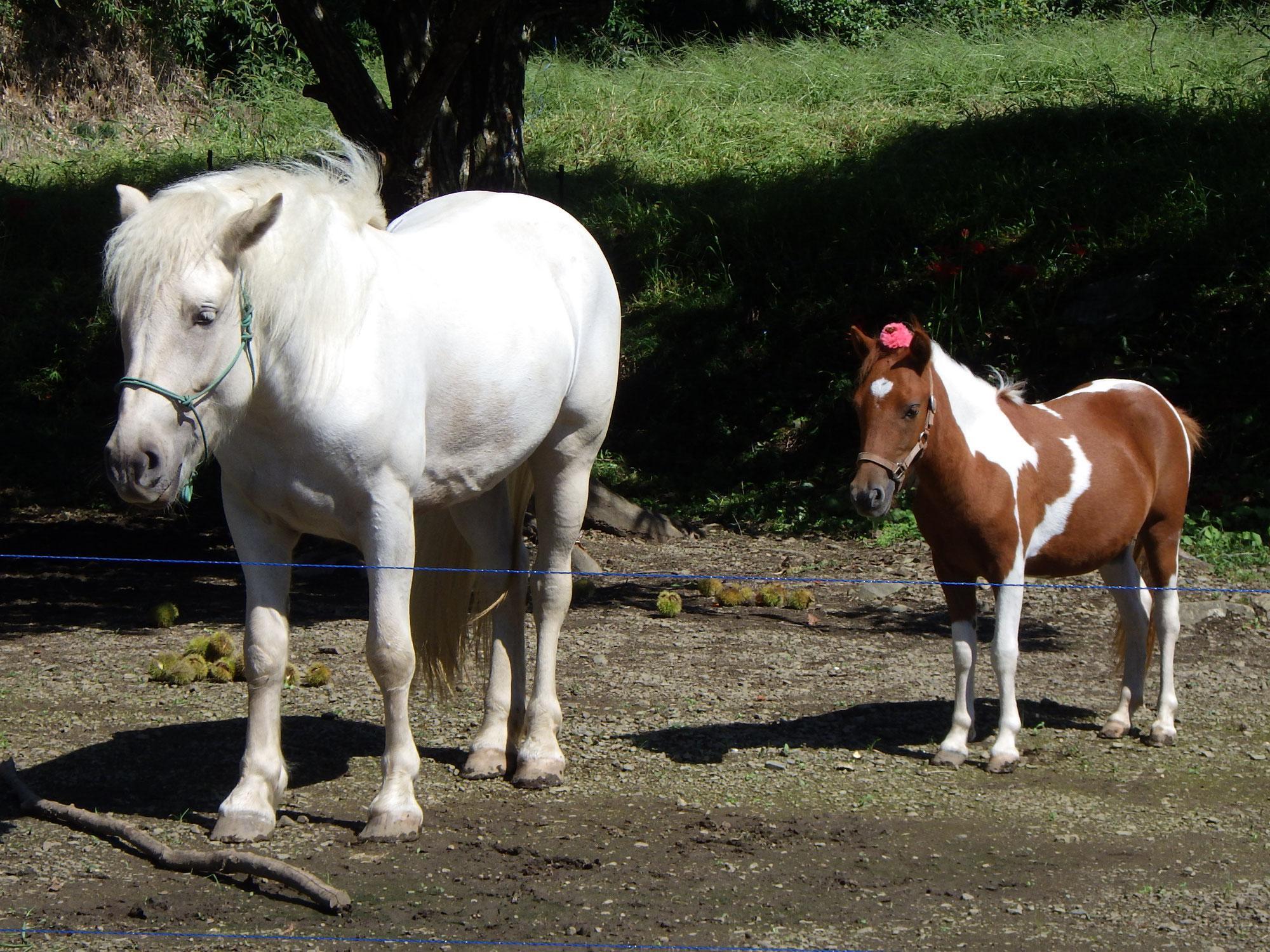 はじめてのグリーンウッドワーク「馬と一緒にスプーンづくり」