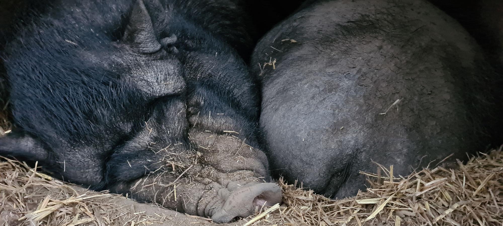 Winterschlaf auf dem Hühnerhof
