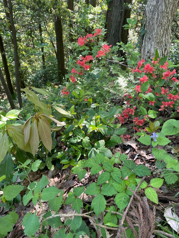 自然の埋め込み生け花