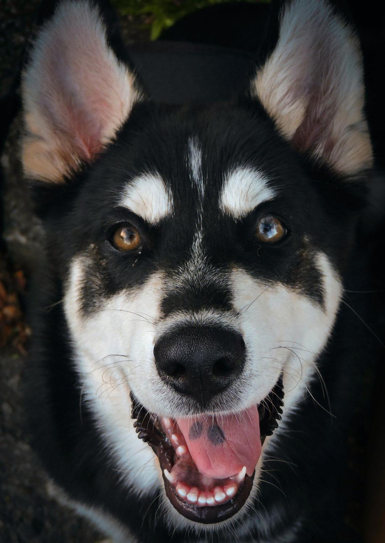 Weet jij wat 'een hond' is?