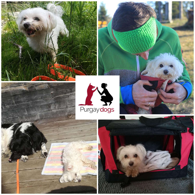 Hundetraining mit kleinen Hunden