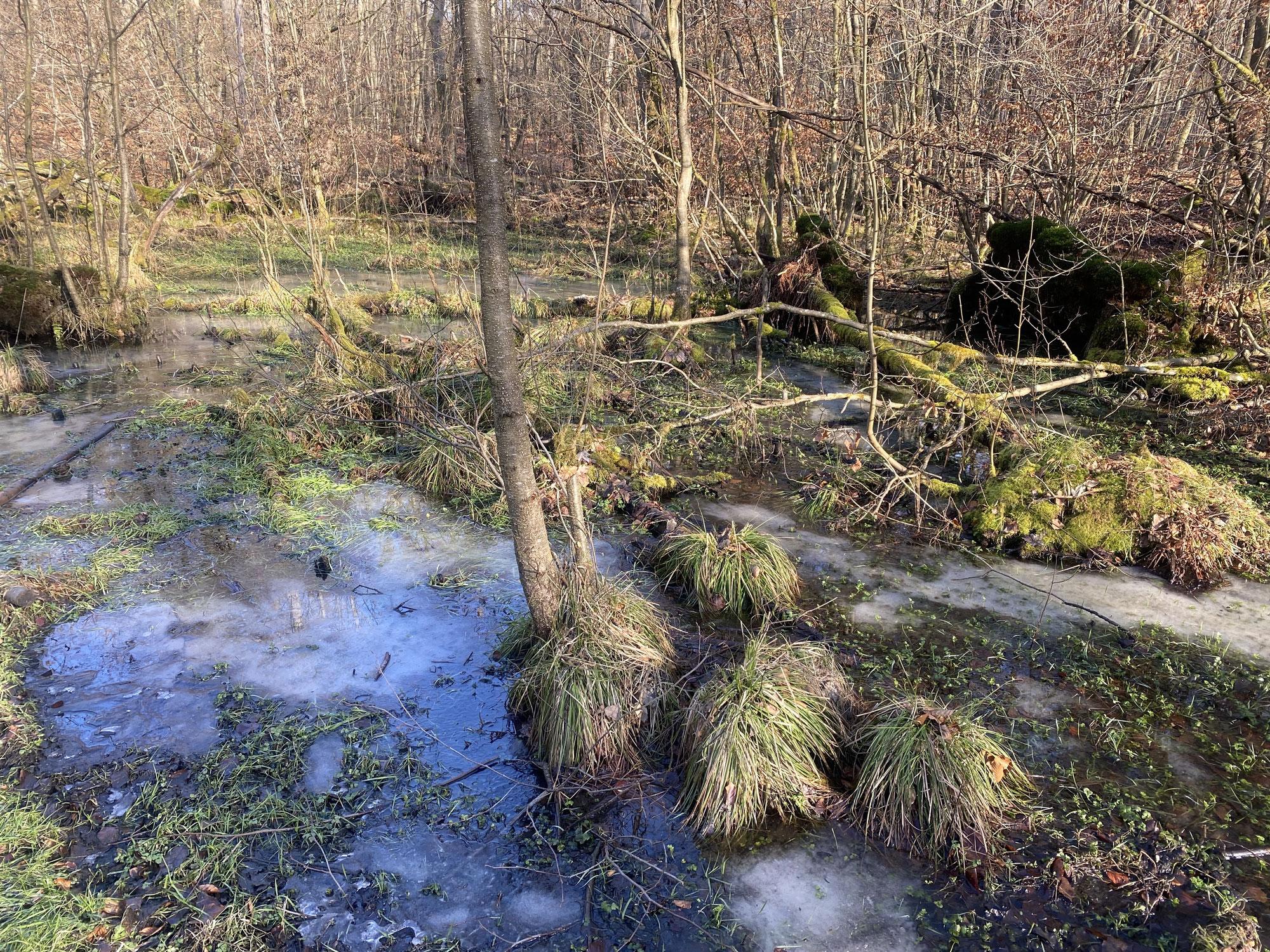 Vom Naturschutzgebiet Rodenbeker Quellental ins Naturschutzgebiet Wohldorfer Wald
