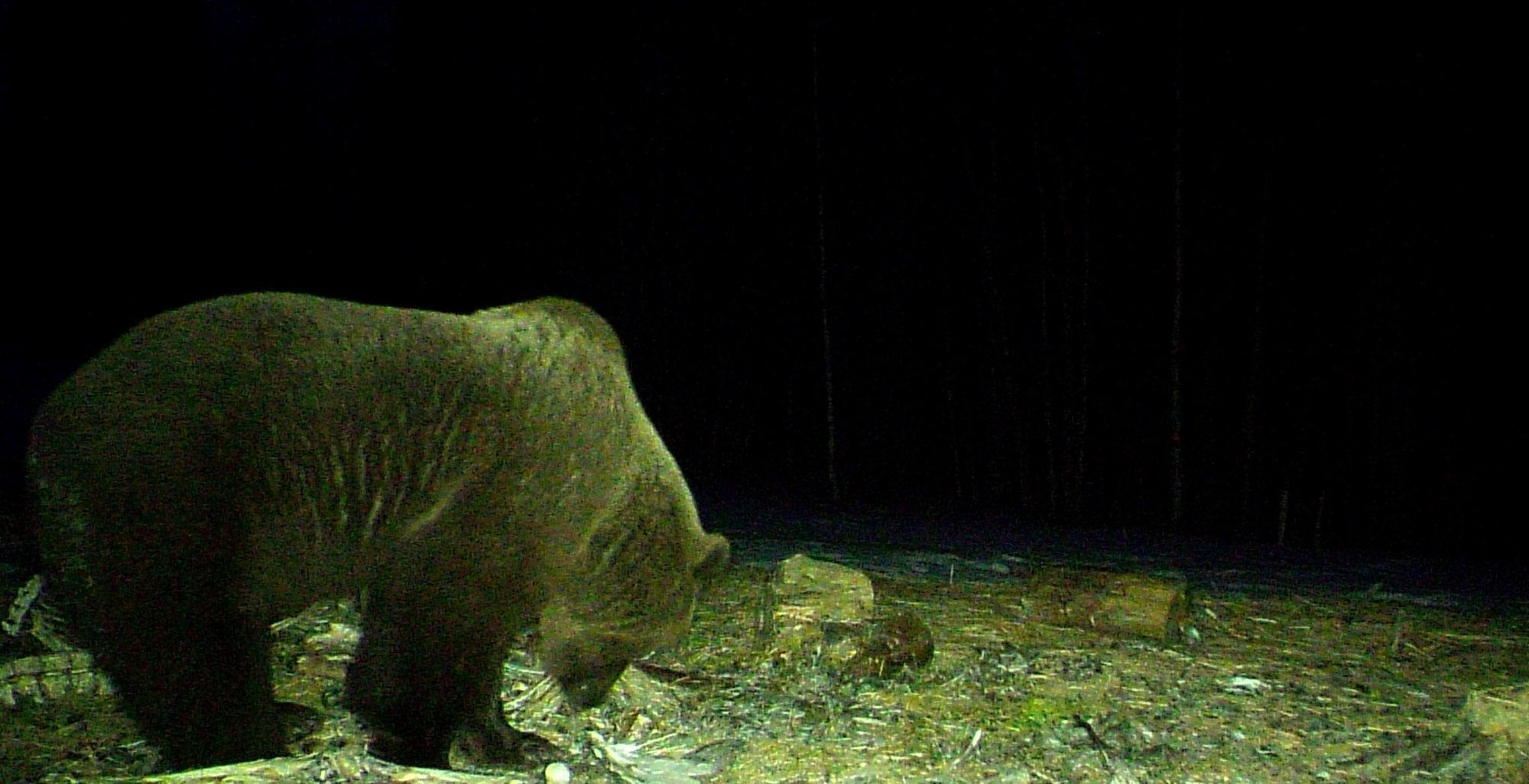 Bären - Erwachen!